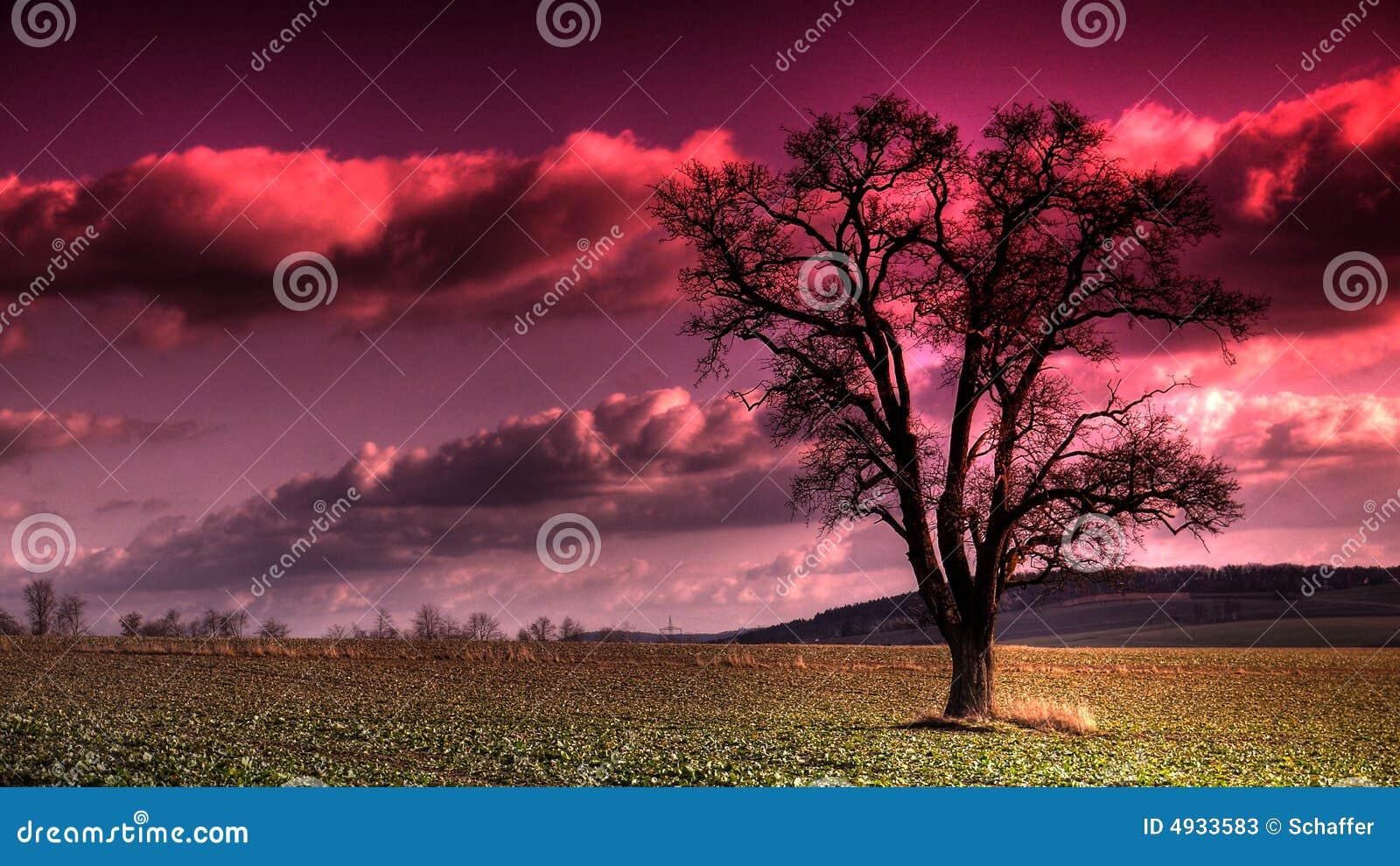 Purpur sky