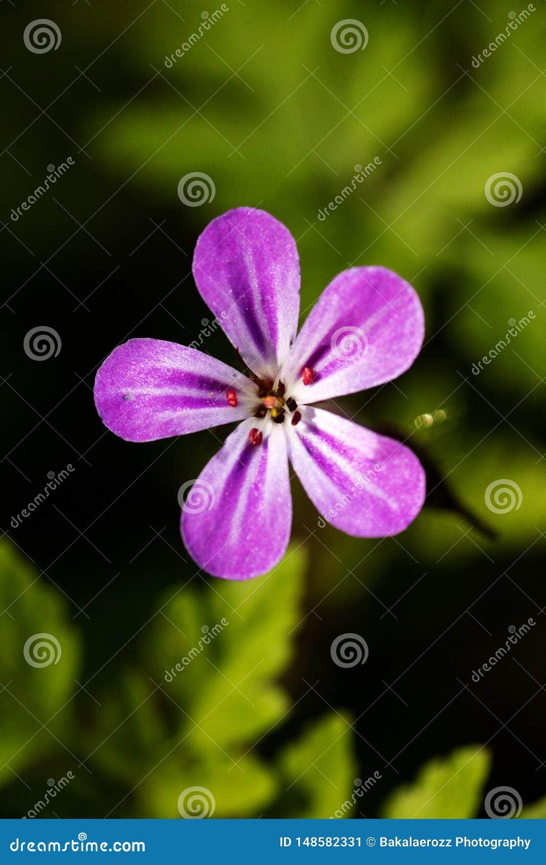 Purpurowa dzikiego kwiatu t?a sztuka pi?kna w wysokiej jako?ci druk?w produktach Canon 5DS - 50,6 Megapixels