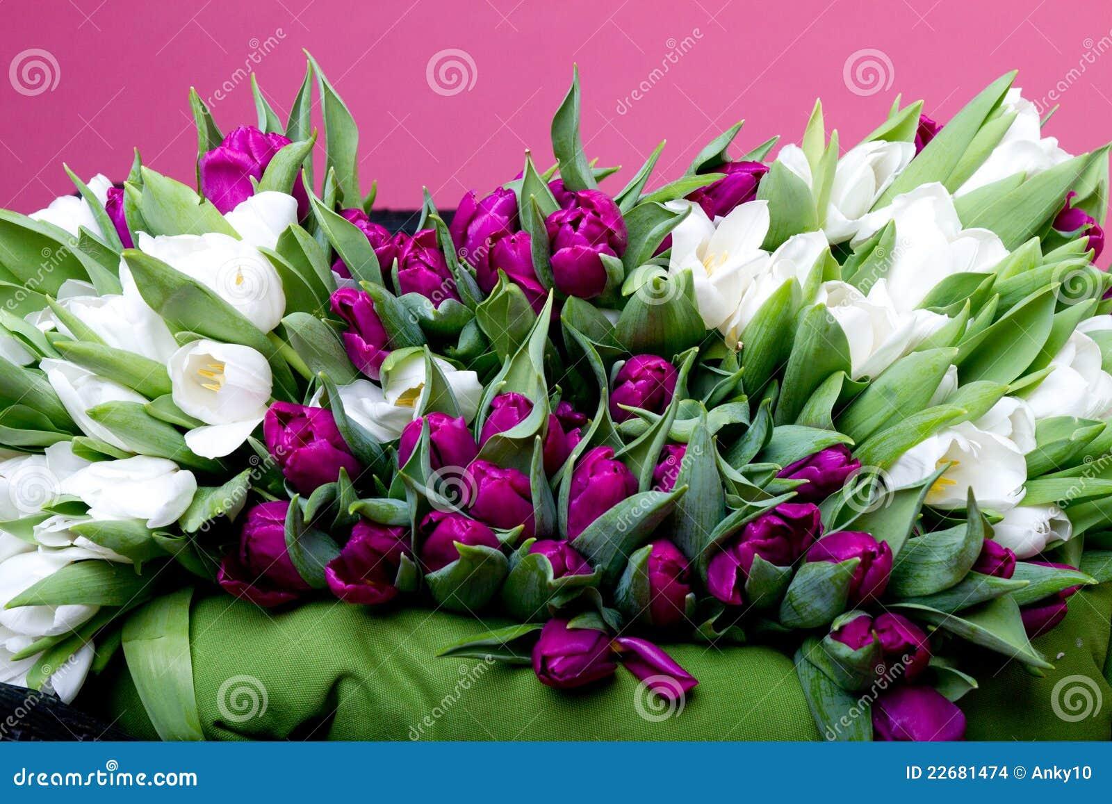 purpurrote und wei e tulpen auf schwarzem stuhl stockbilder bild 22681474. Black Bedroom Furniture Sets. Home Design Ideas
