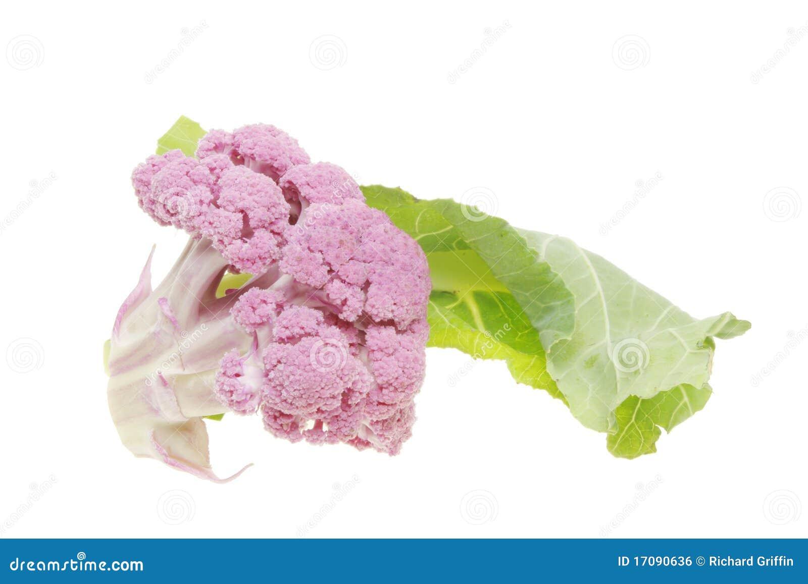 Purpurroter Blumenkohl und grünes Blatt
