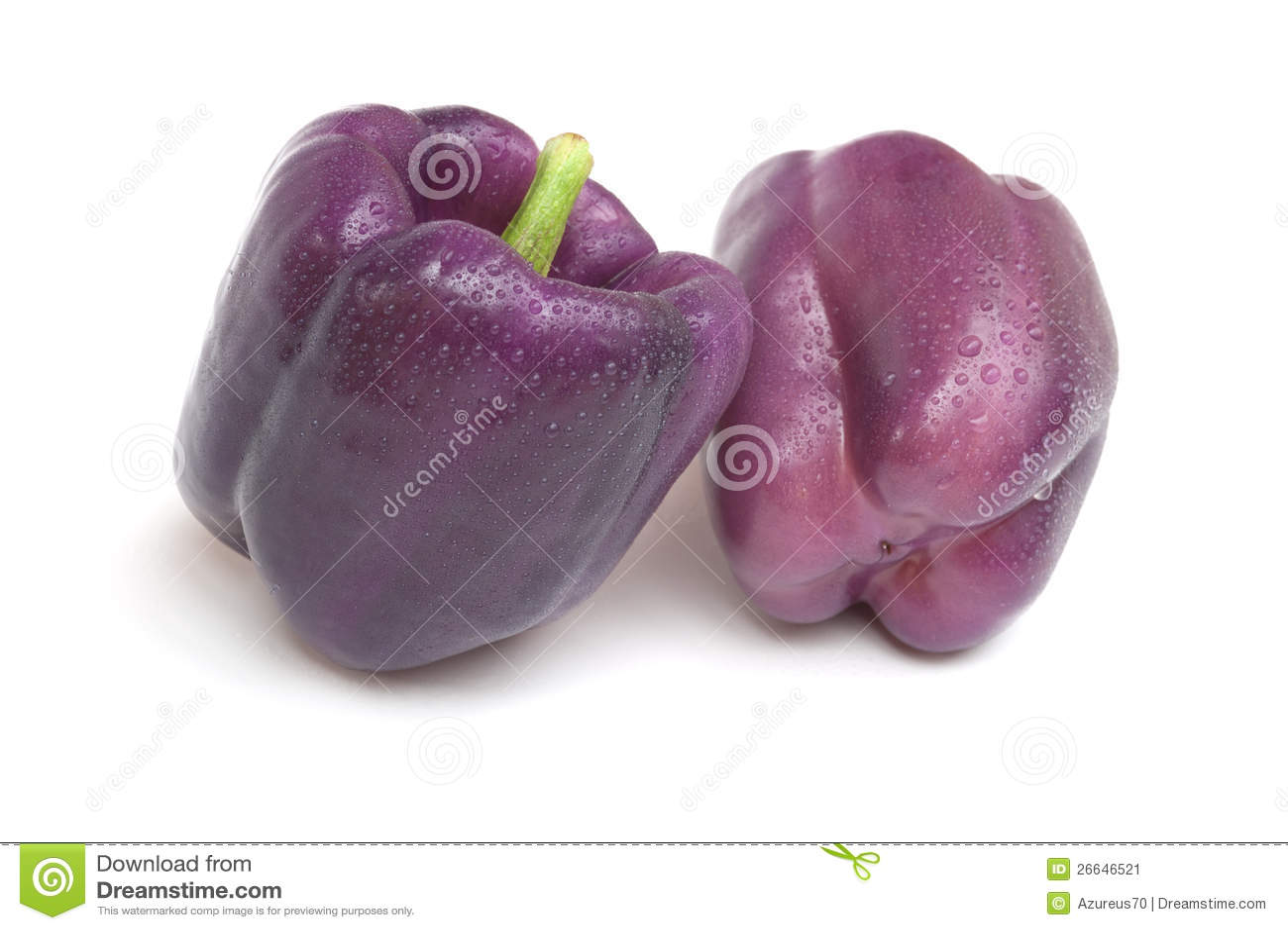 Purpurroter Schönheits-Pfeffer