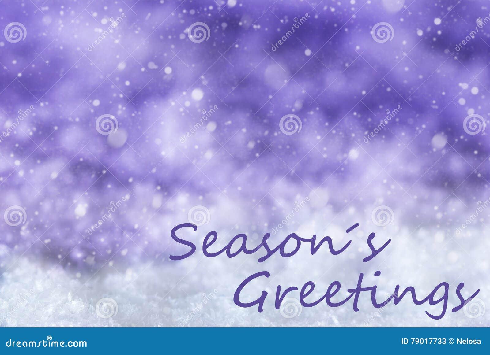 Purpurroter Weihnachtshintergrund, Schnee, Schneeflocken, Text Würzt ...