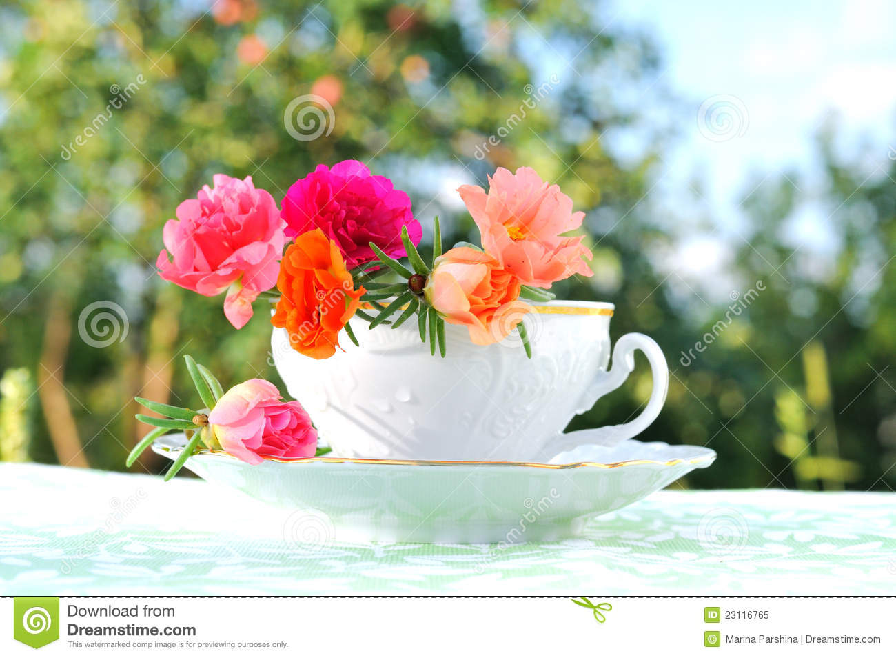 purslane flowers in a cup stock image image of life 23116765