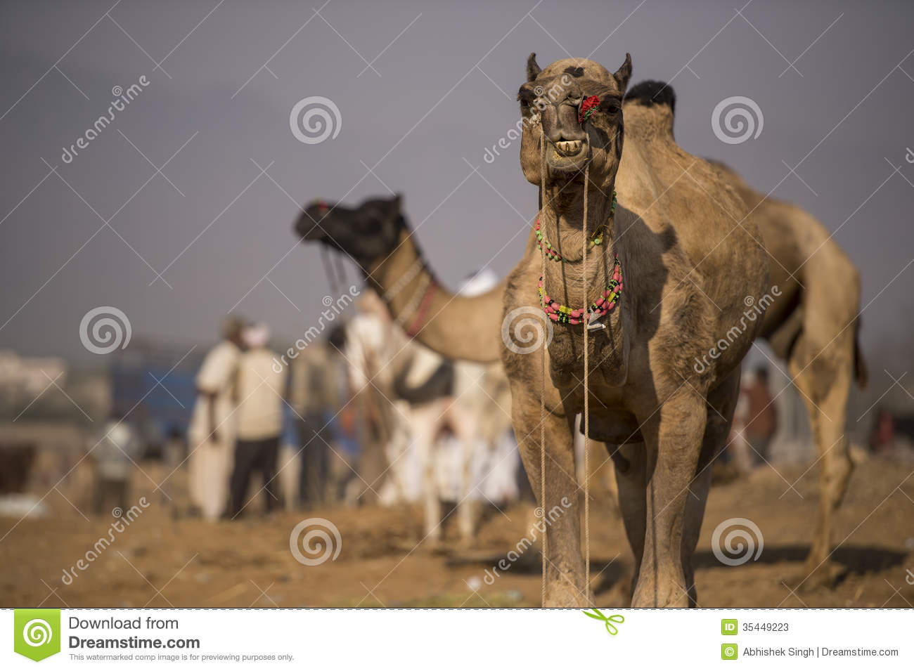 Pushkar International Camel fair