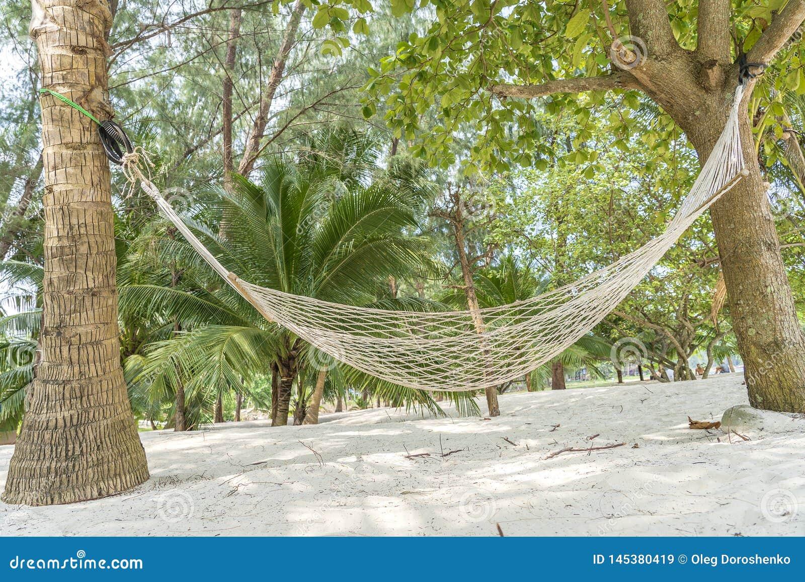 Pusty hamak na pi?knej tropikalnej piasek pla?y i zieleni drzewku palmowym, Tajlandia