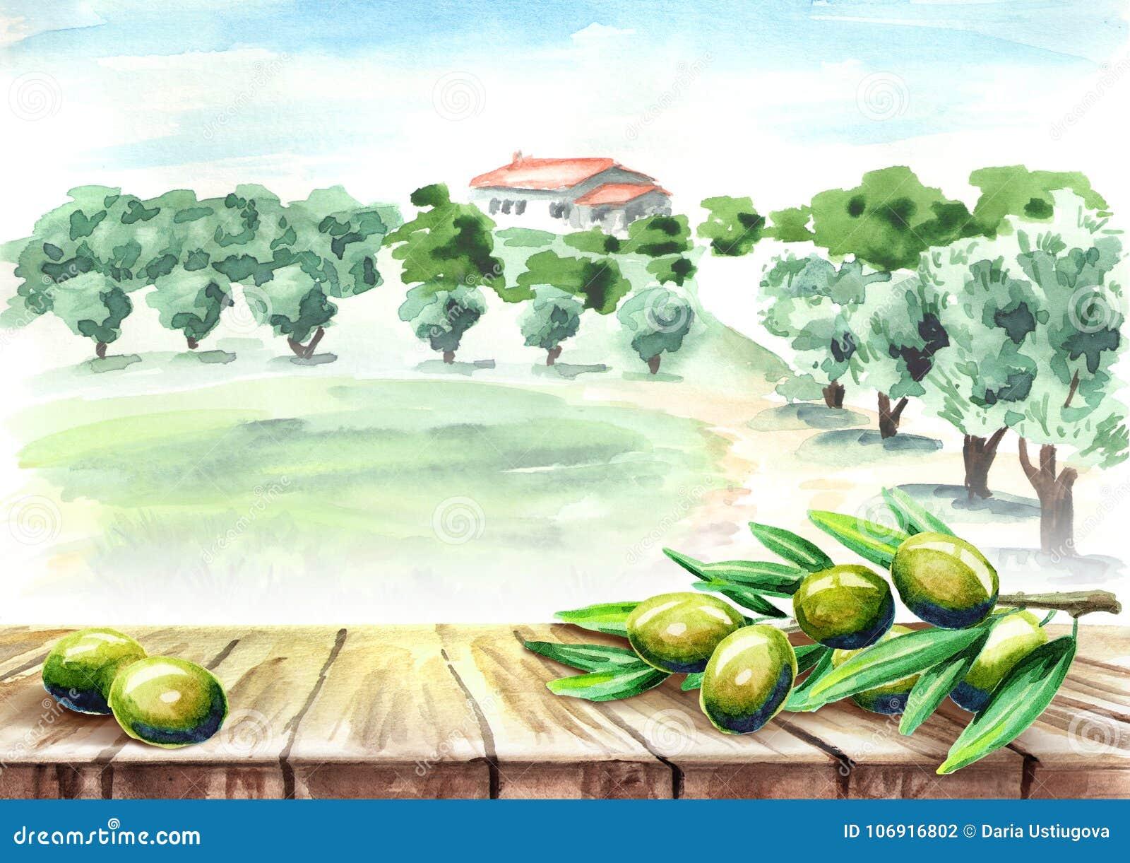 Pusty stół z oliwnym śniadanio-lunch w oliwnego gaju krajobrazie