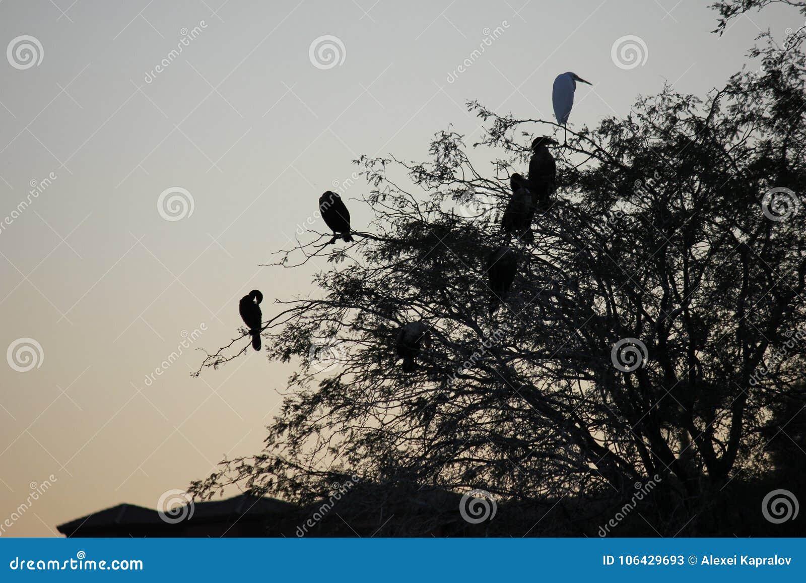 Pustynni ptaki miewają skłonność być target5_0_ obfici dokąd roślinność jest lusher i tak oferuje insekty, owoc i ziarna więcej,
