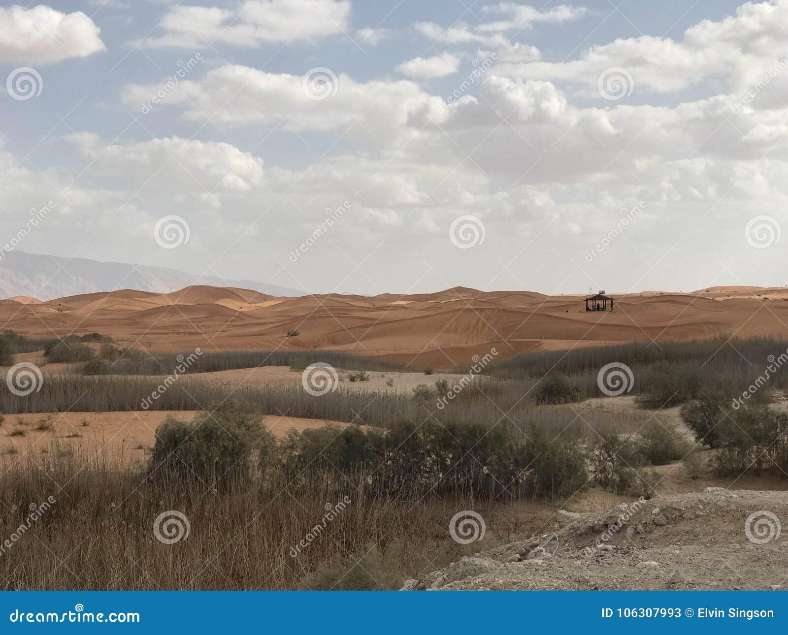 Pustynny Al Ain UAE Abu Dhabi safari