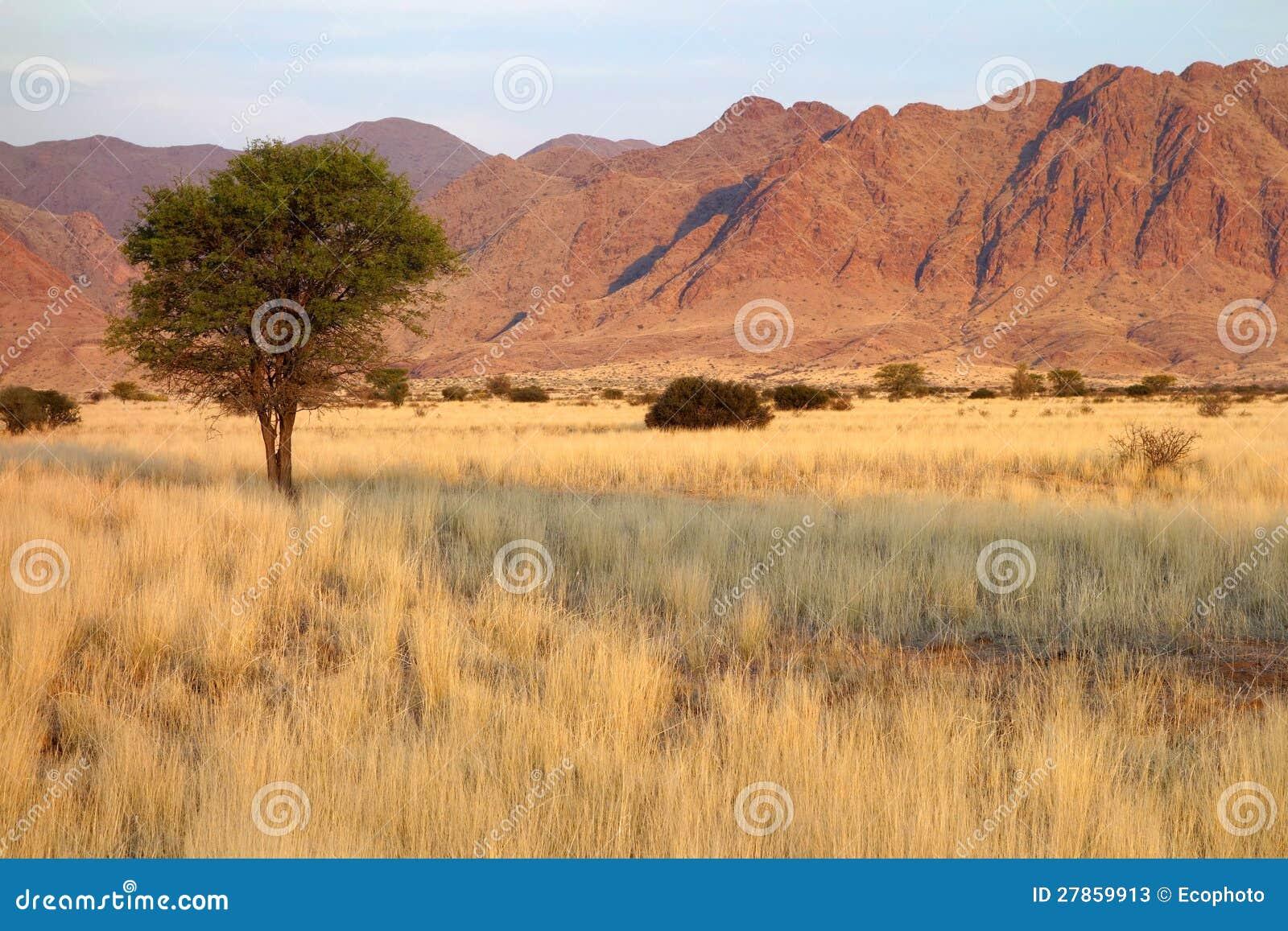 Pustynny krajobraz