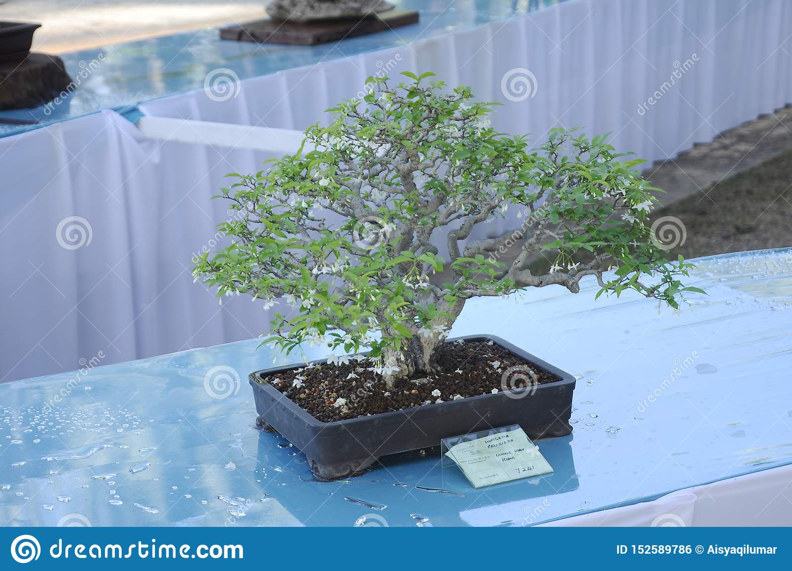 Bonsai Tree Display For Public In Royal Floria Putrajaya