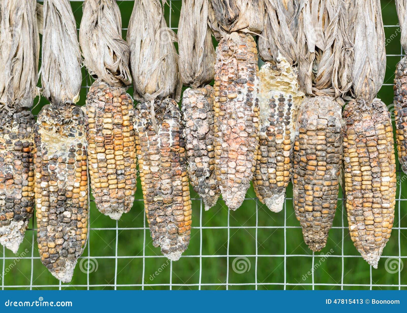 Putrefazione del cereale