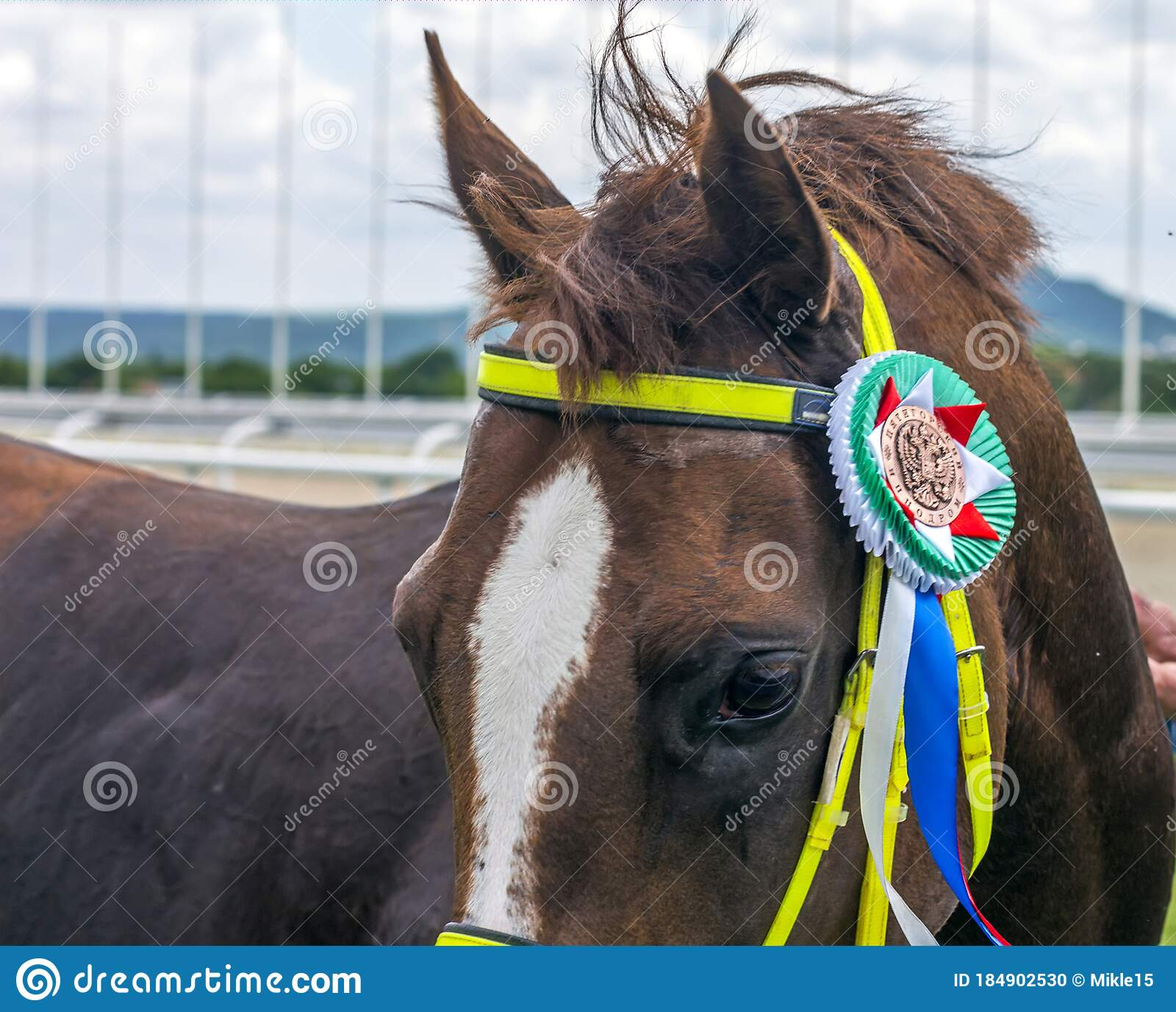 Portrait Of A Red Arabian Horse Editorial Image Image Of Award Domestic 184902530