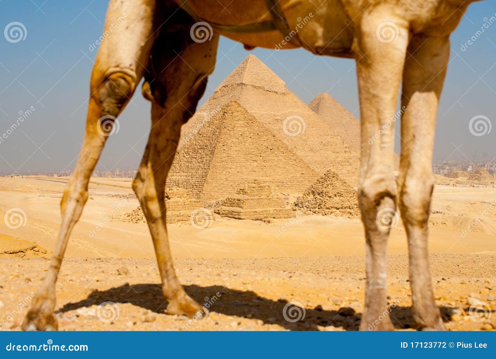 Pyramiden gestaltet durch Kamel-Fahrwerkbeine
