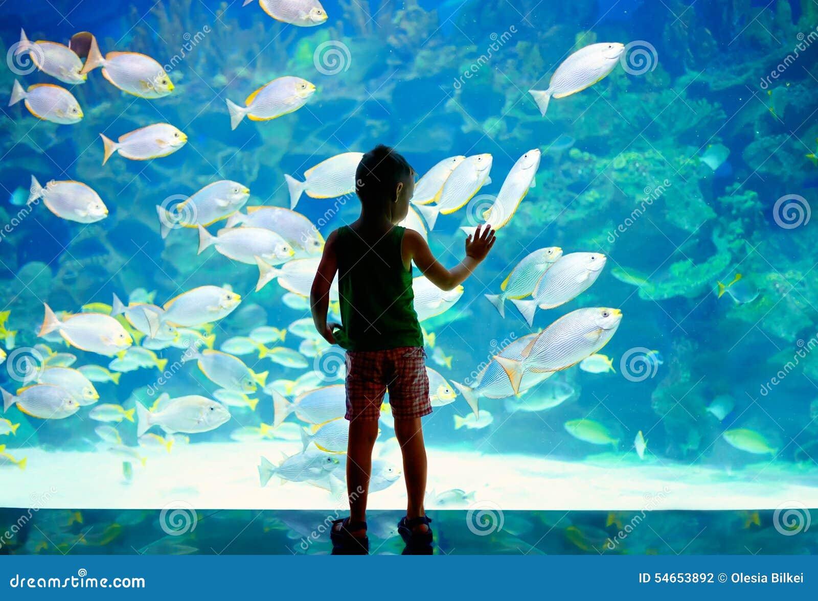Pys unge som håller ögonen på stimen av fisksimning i oceanarium