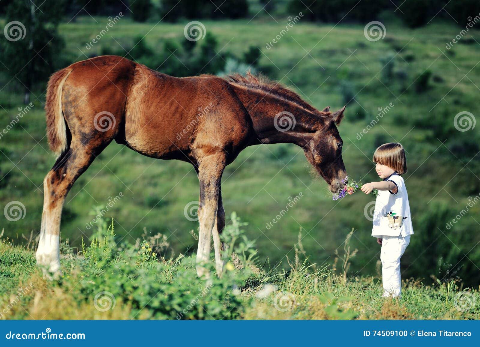 Pysen matar hästen
