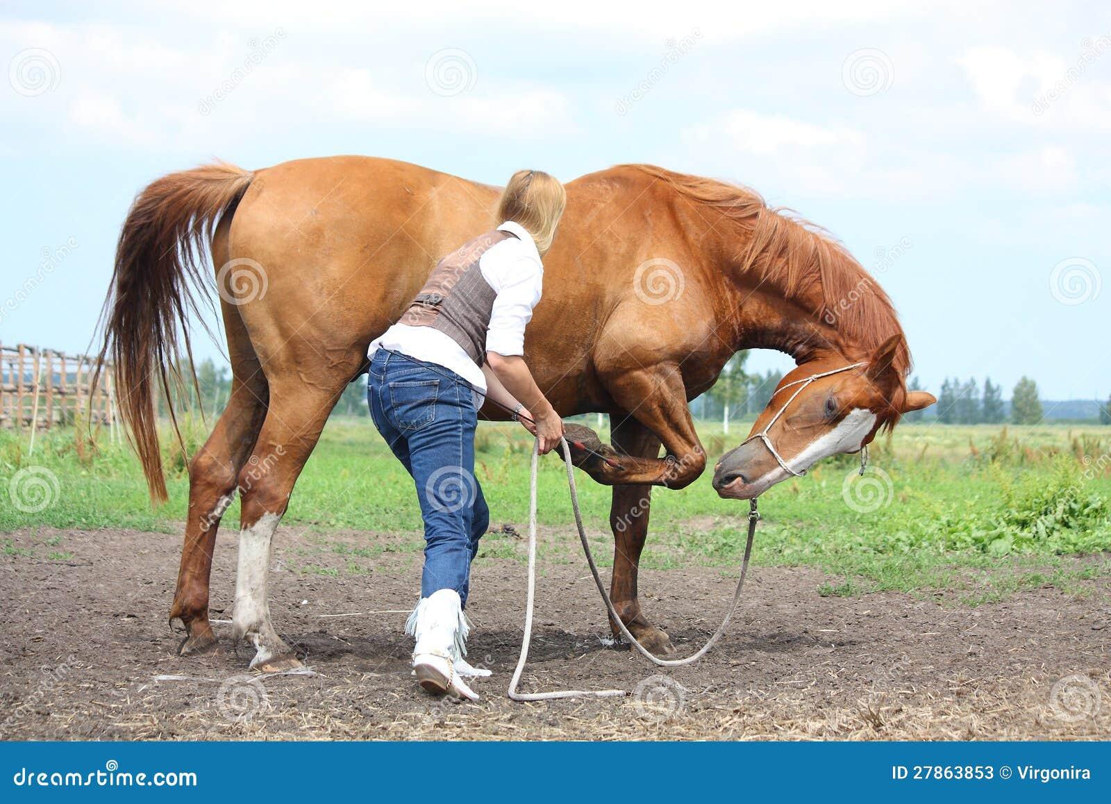 Pytać cisawego konia target831_0_ blondynki młoda kobieta