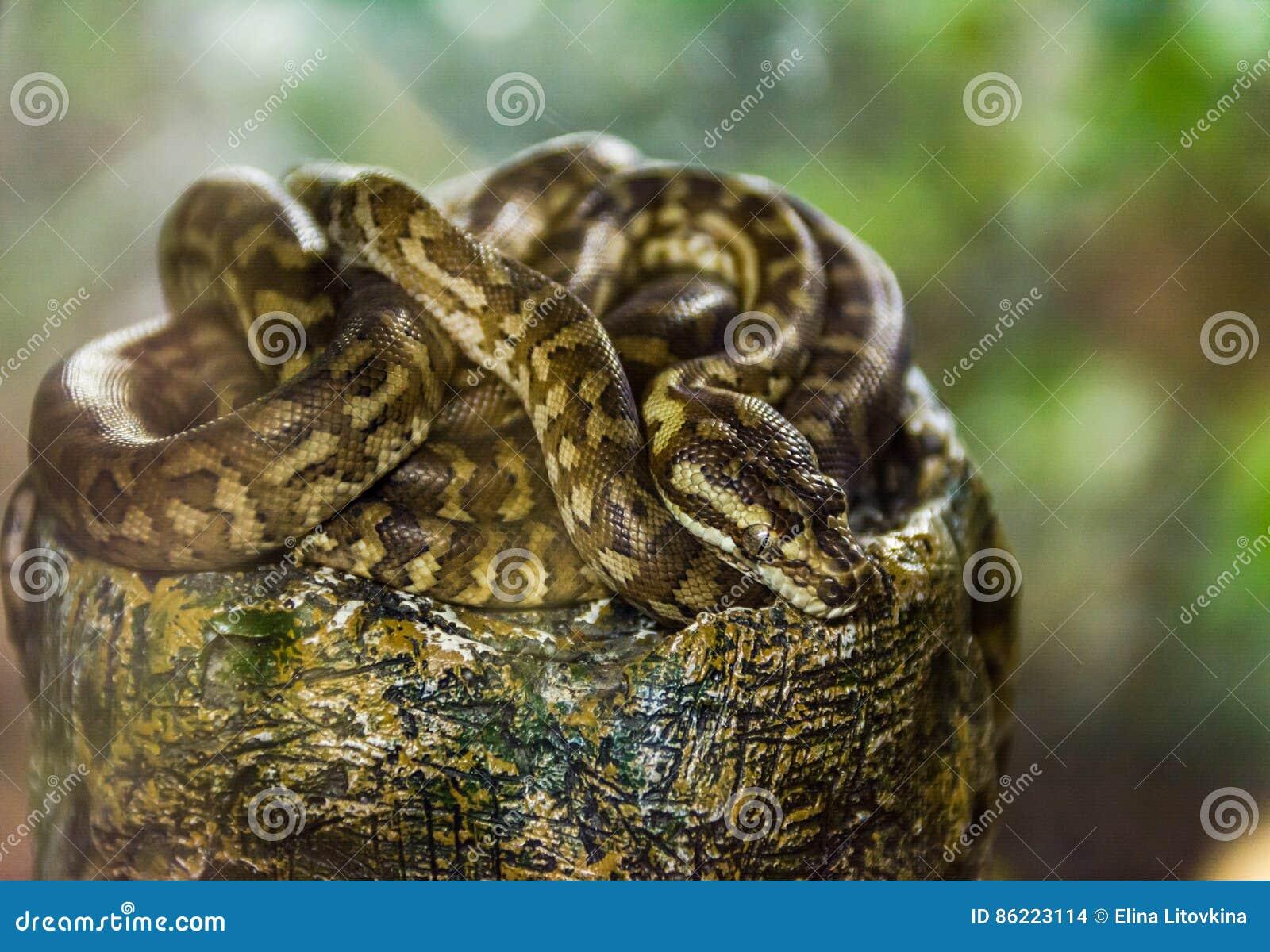 Python repéré