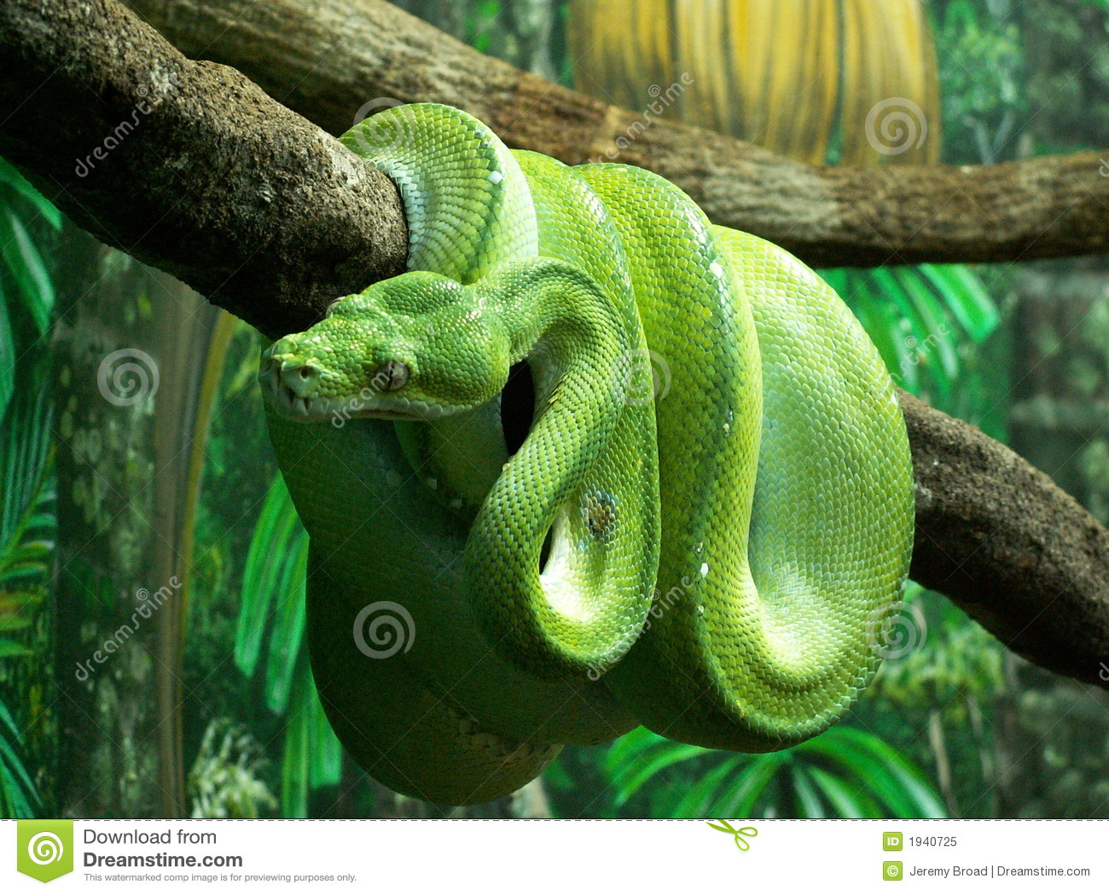 Python vert