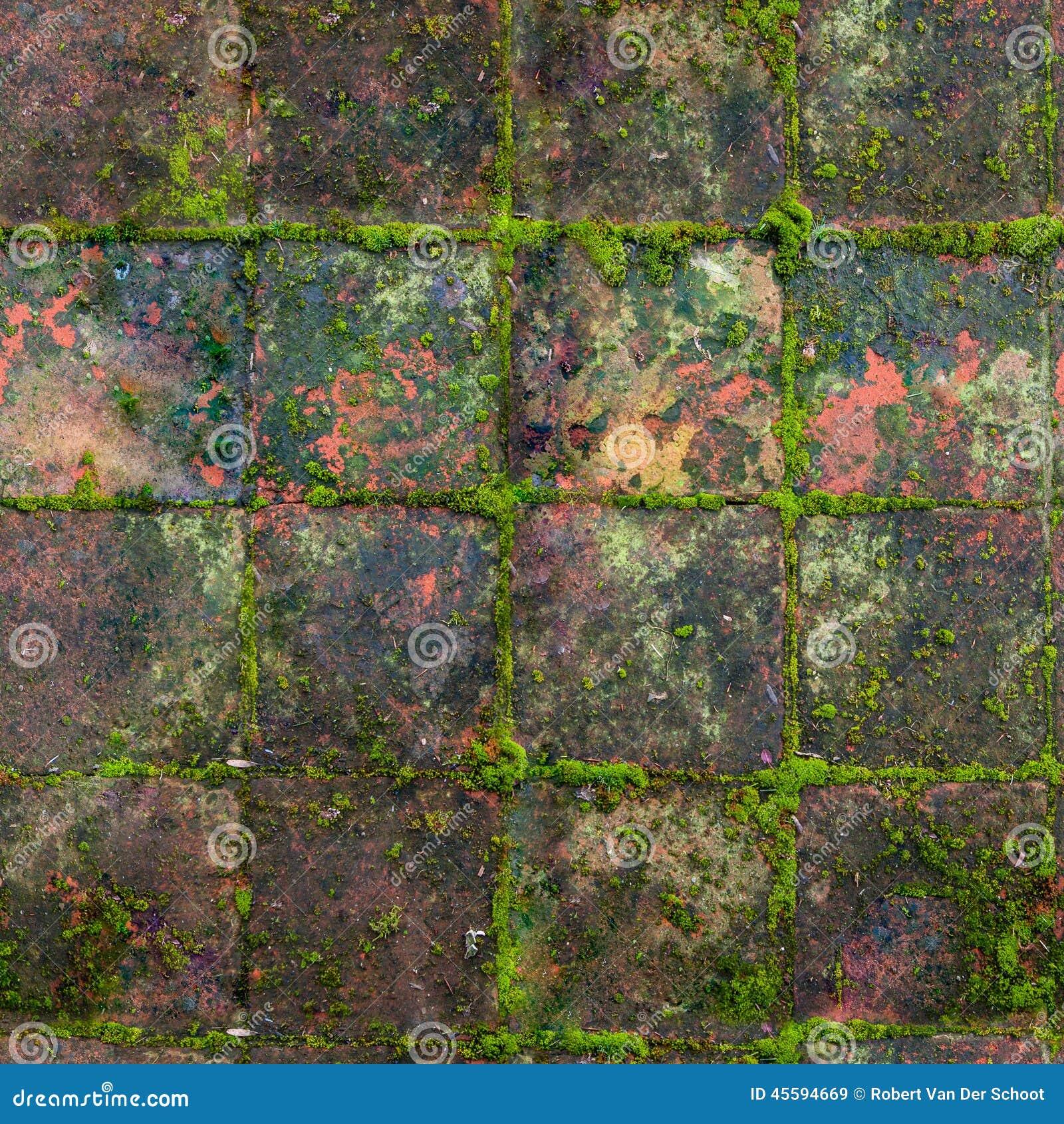 QG sans couture, vieilles tuiles extérieures moussues médiévales de texture tileable