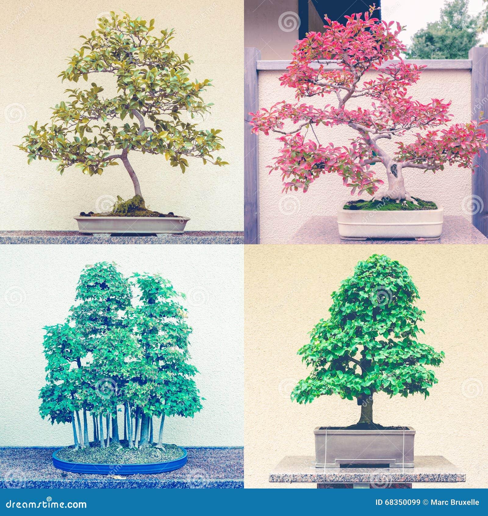 Quadratische Montage von vier Bonsaibäumen