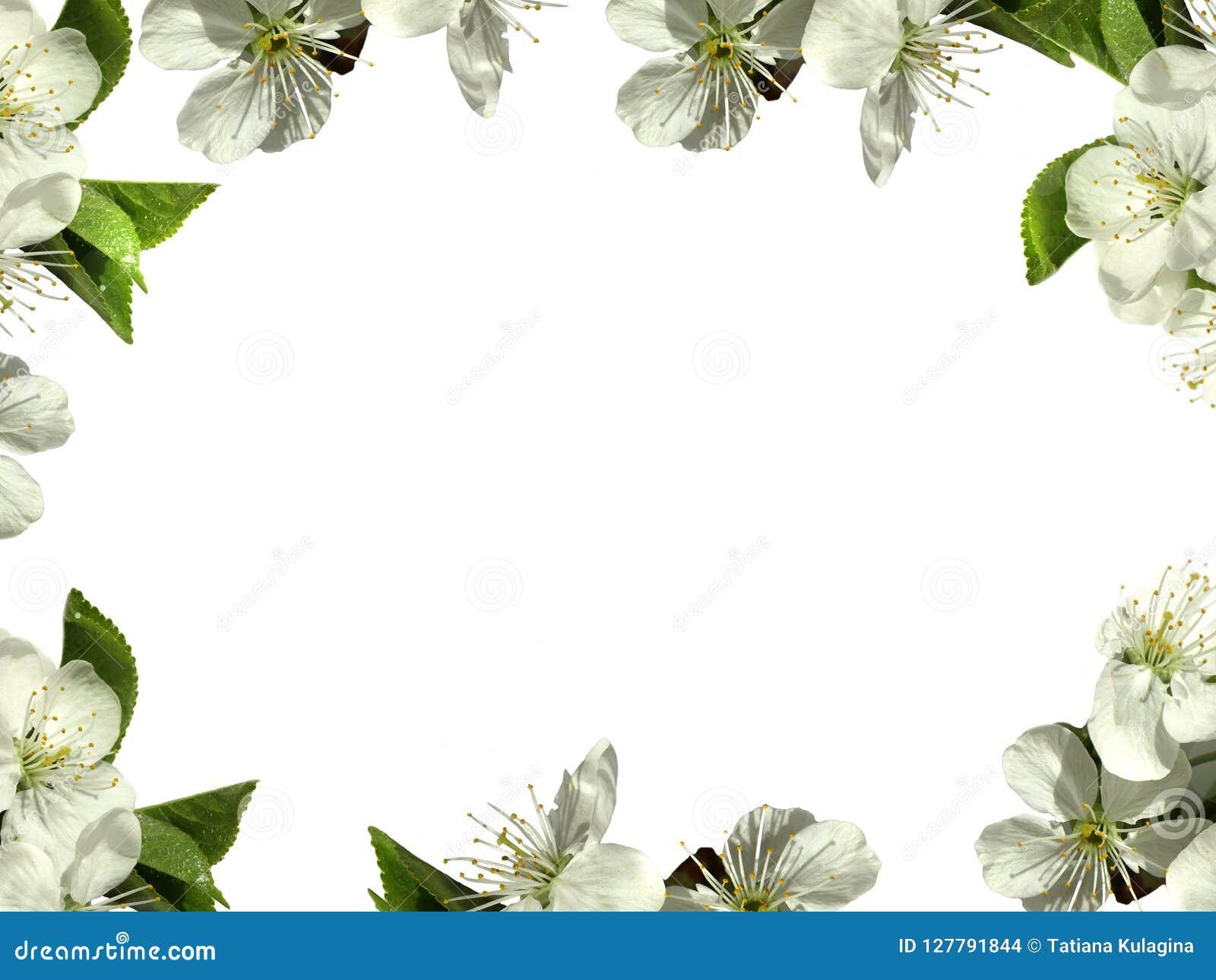 Quadro Com Flores Brancas Png Foto De Stock Imagem De