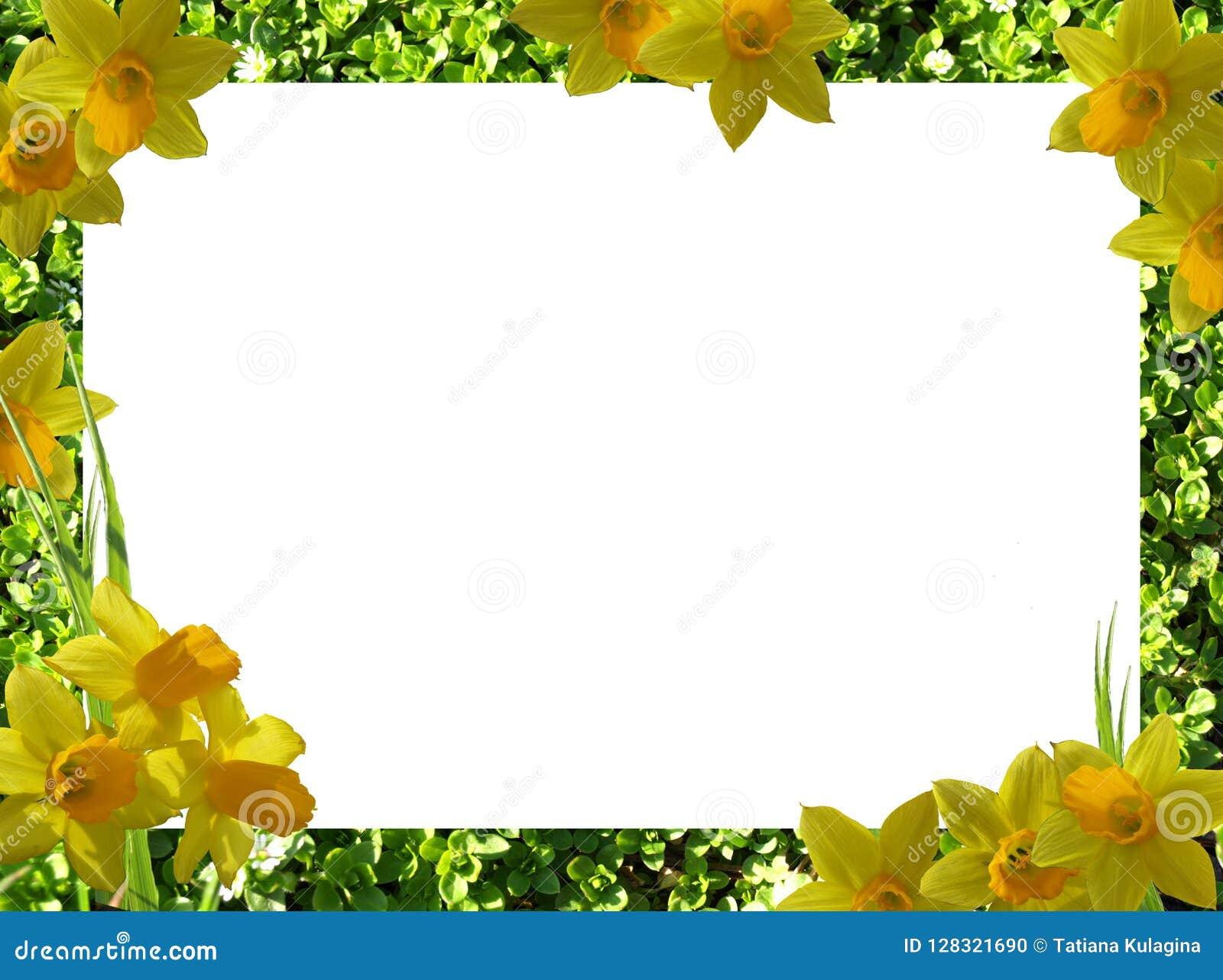 Quadro Das Flores Png Foto De Stock Imagem De Projeto 128321690