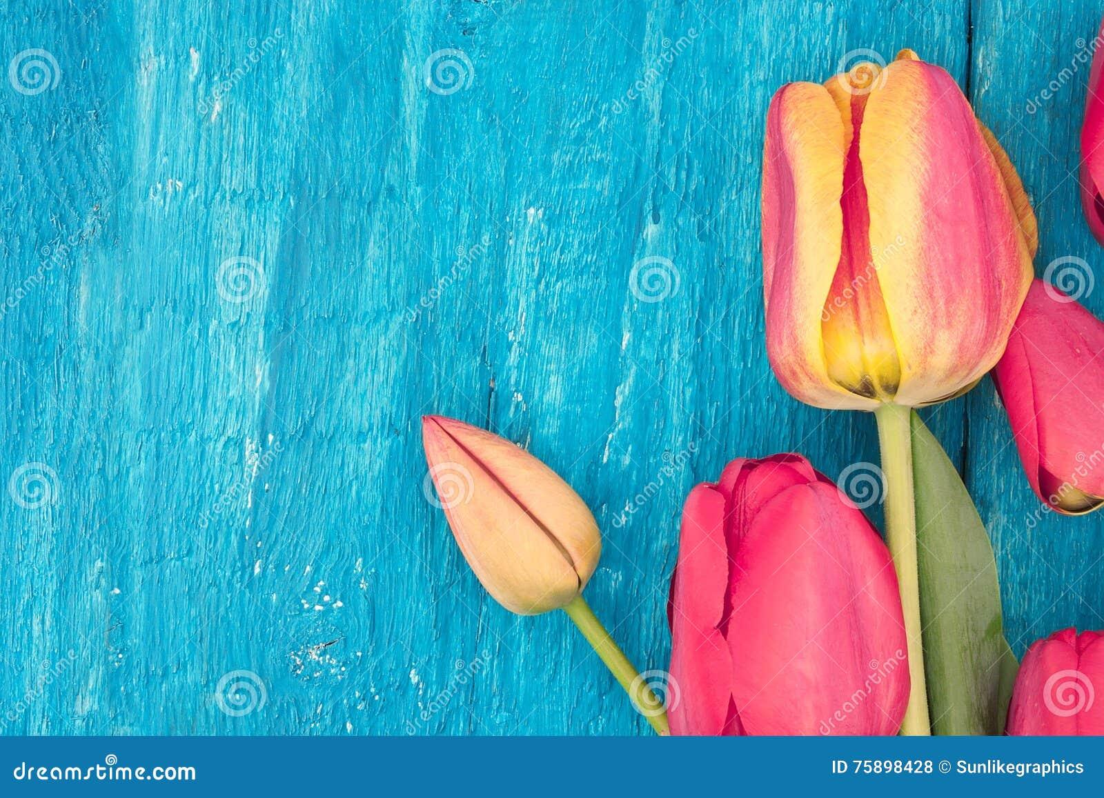 Quadro das tulipas no fundo de madeira rústico de turquesa Mola fl
