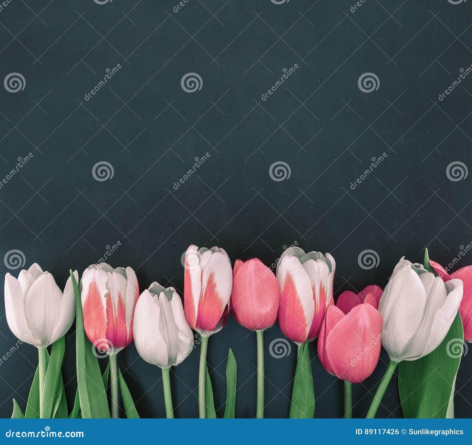 Quadro das tulipas no fundo de pedra preto com espaço da cópia para mim