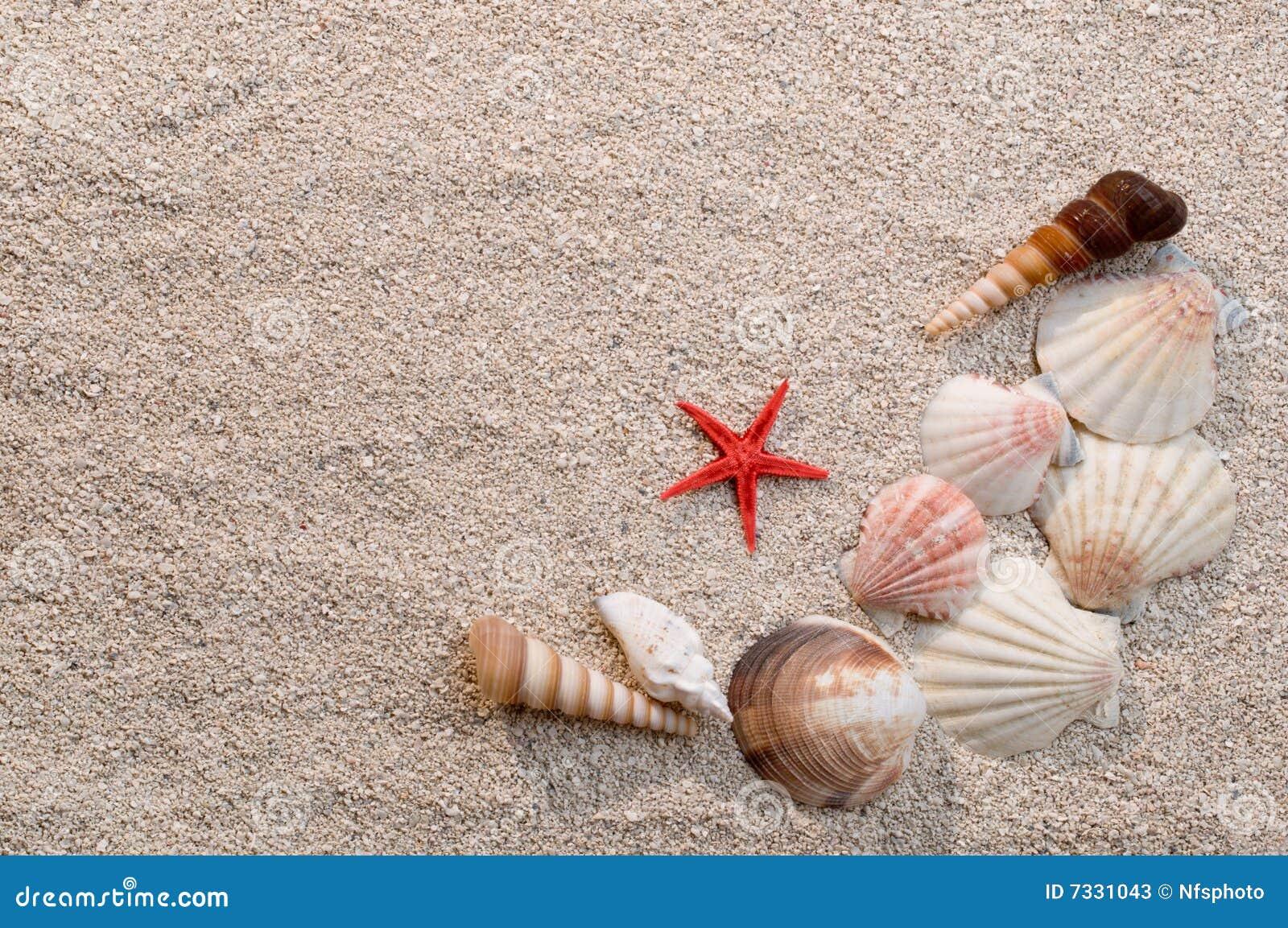 Quadro de escudos e de starfish do mar na areia