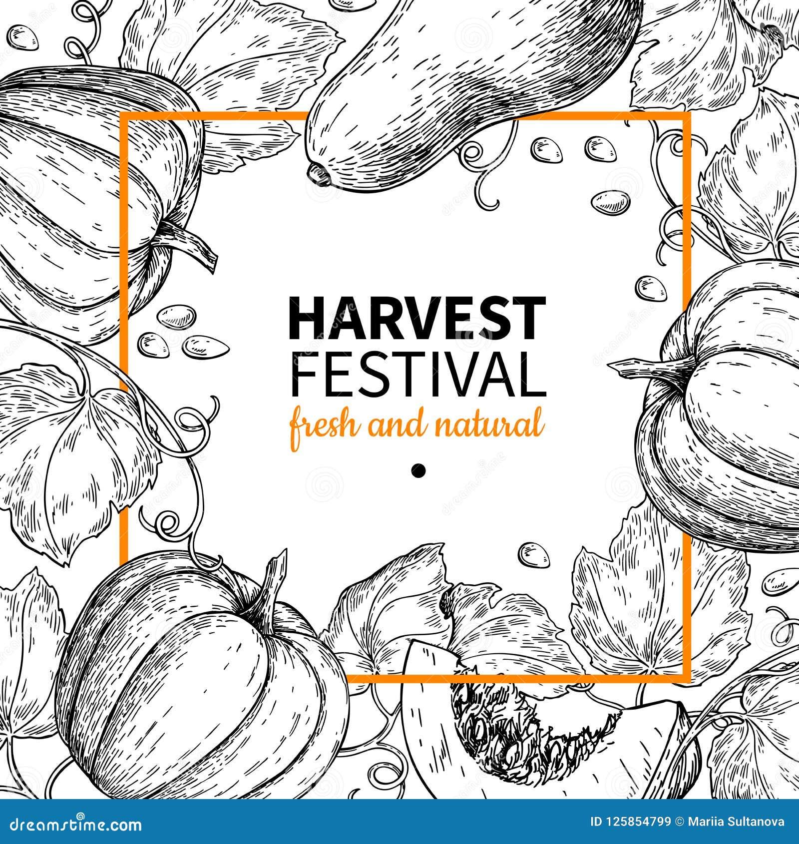 Quadro do vetor da abóbora Ilustração tirada mão do festival da colheita do vintage Esboço do mercado da exploração agrícola