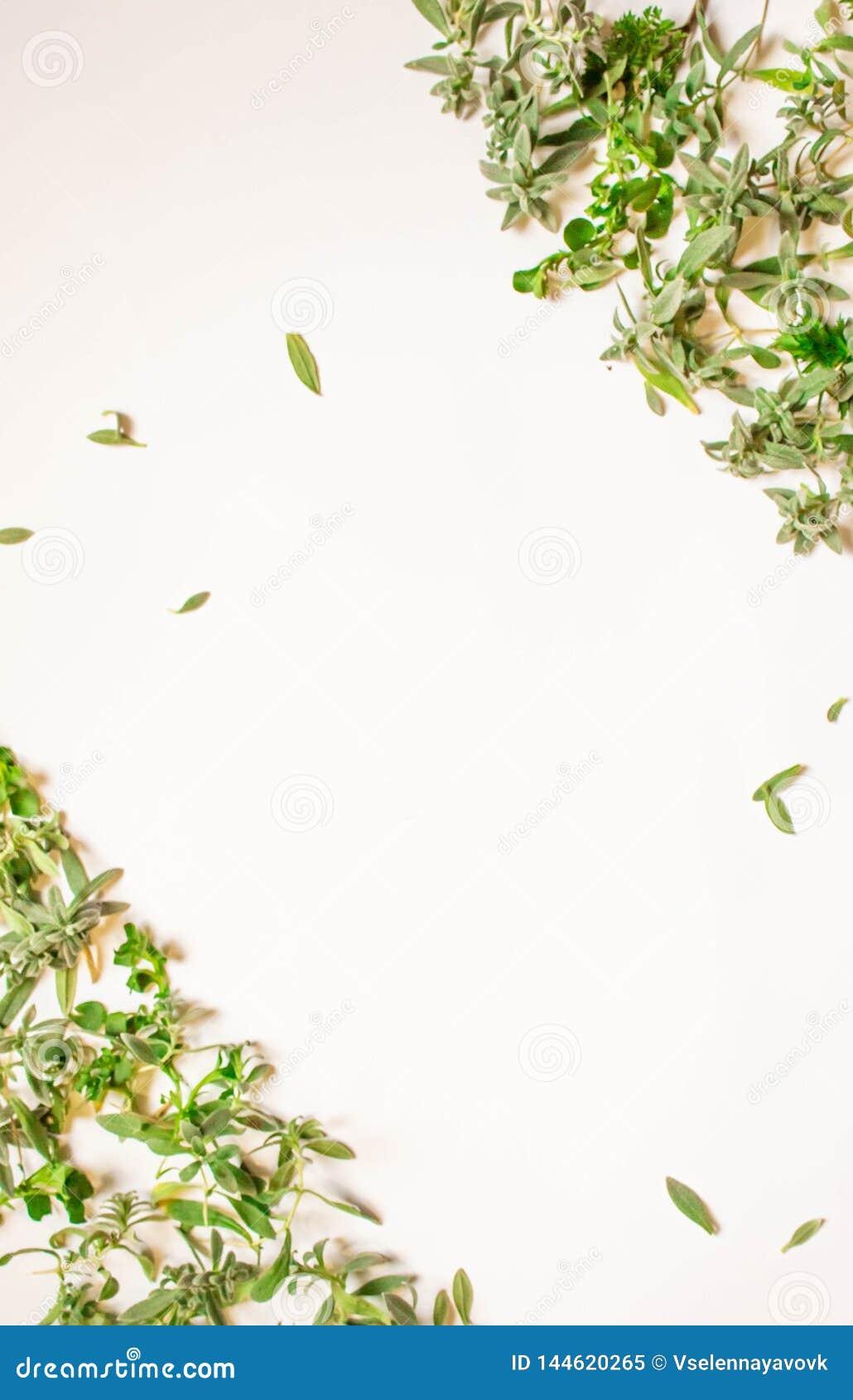 Quadro dos ramos verdes, folhas em um fundo branco Configuração lisa, vista superior