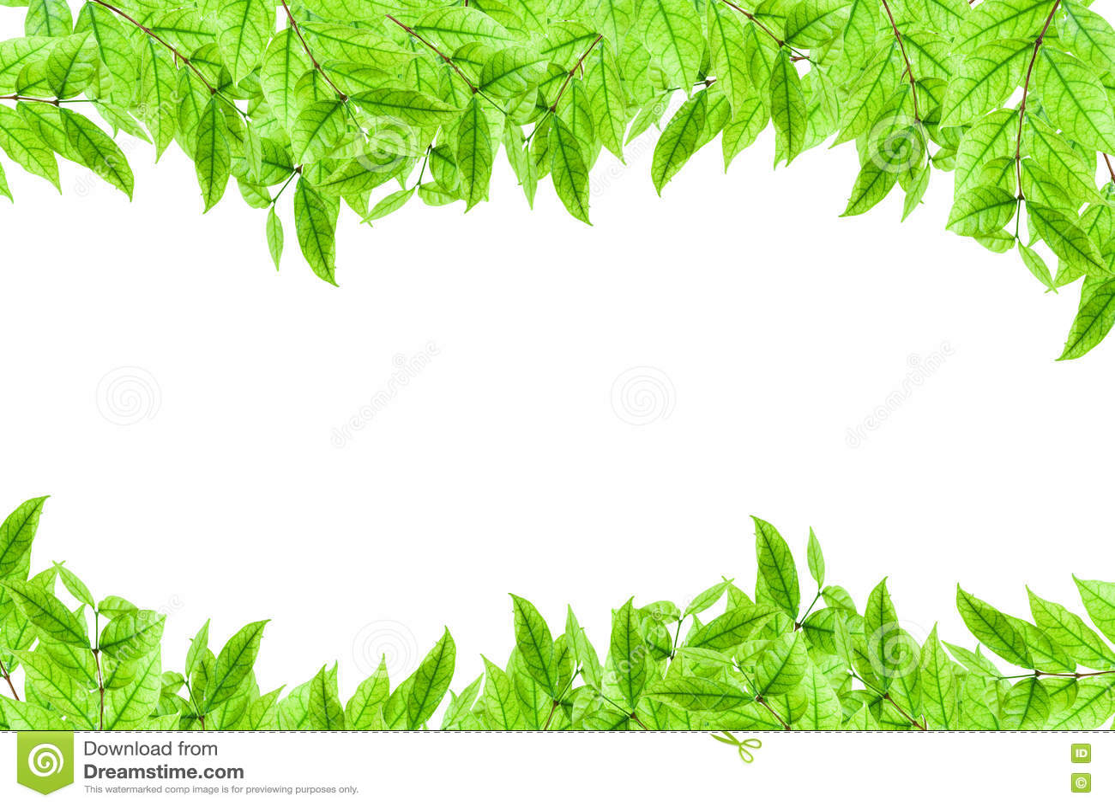Quadro Novo Fresco Da Planta Verde E Da Folha No Fundo