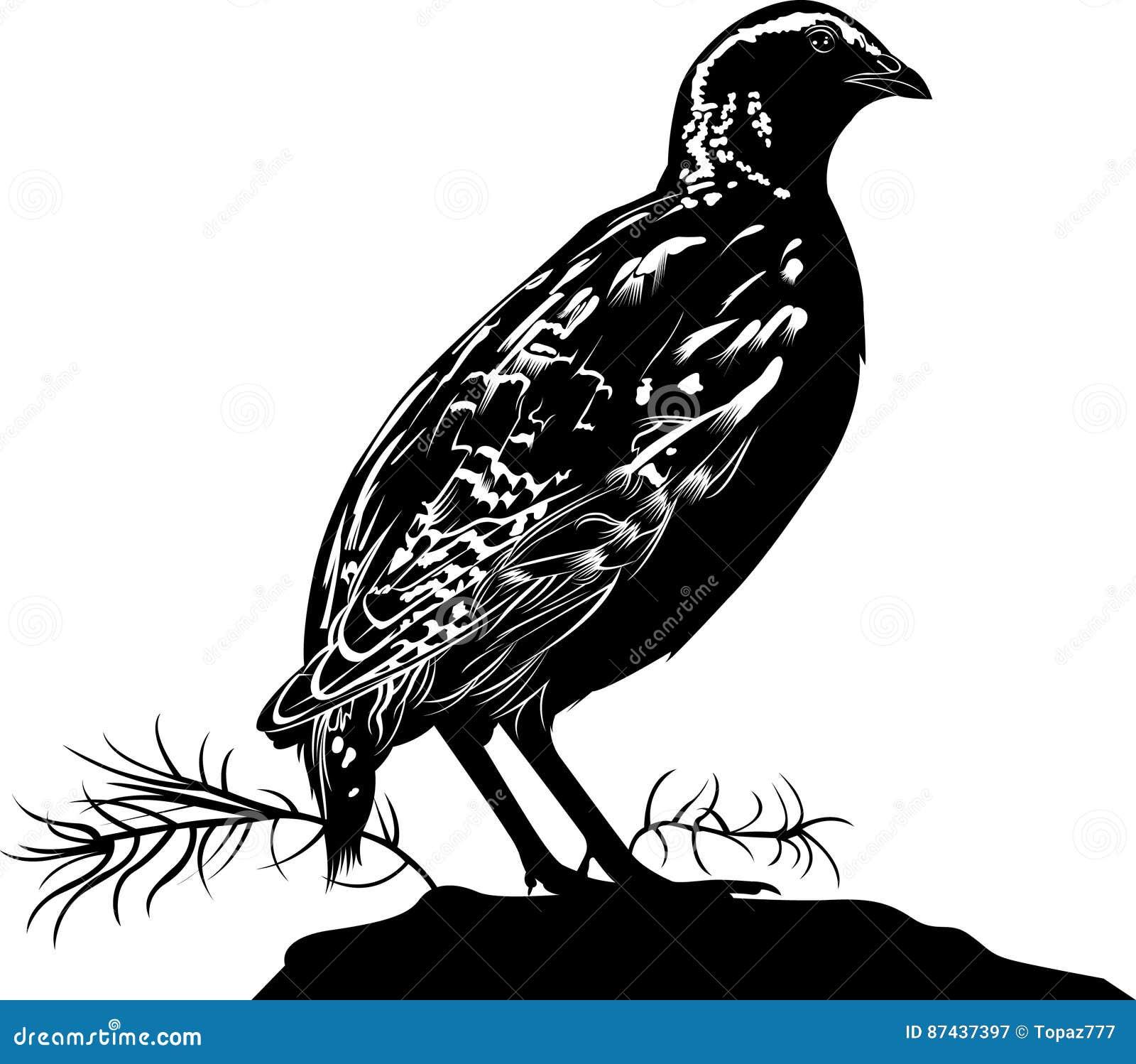 Quail. Bird Quail. Vector Silhouette Cartoon Vector ...