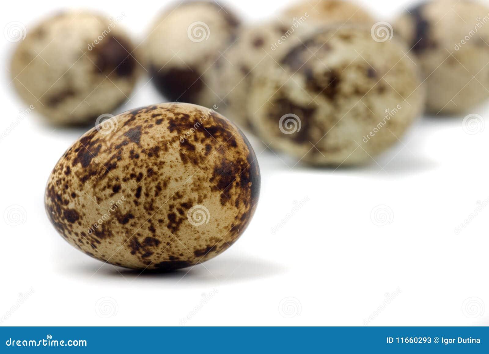 Macro image of quail egg isolated on white background.
