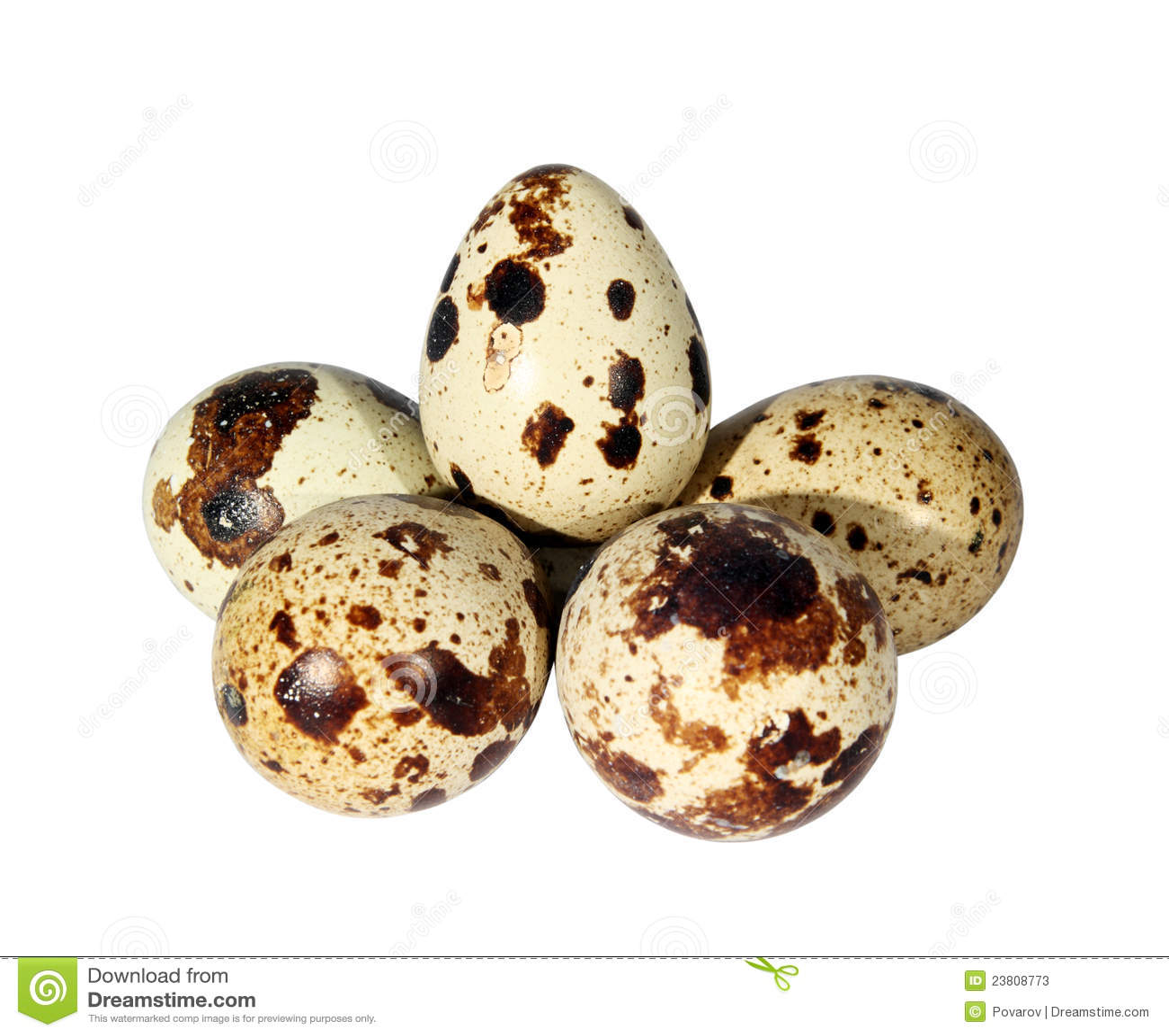 Quail eggs are considered a  Quail Egg Clip Art