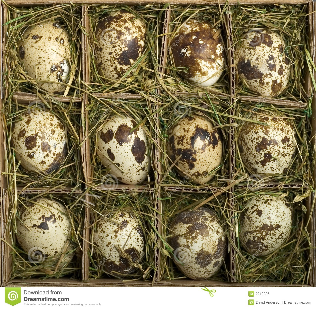 how to sell quail eggs