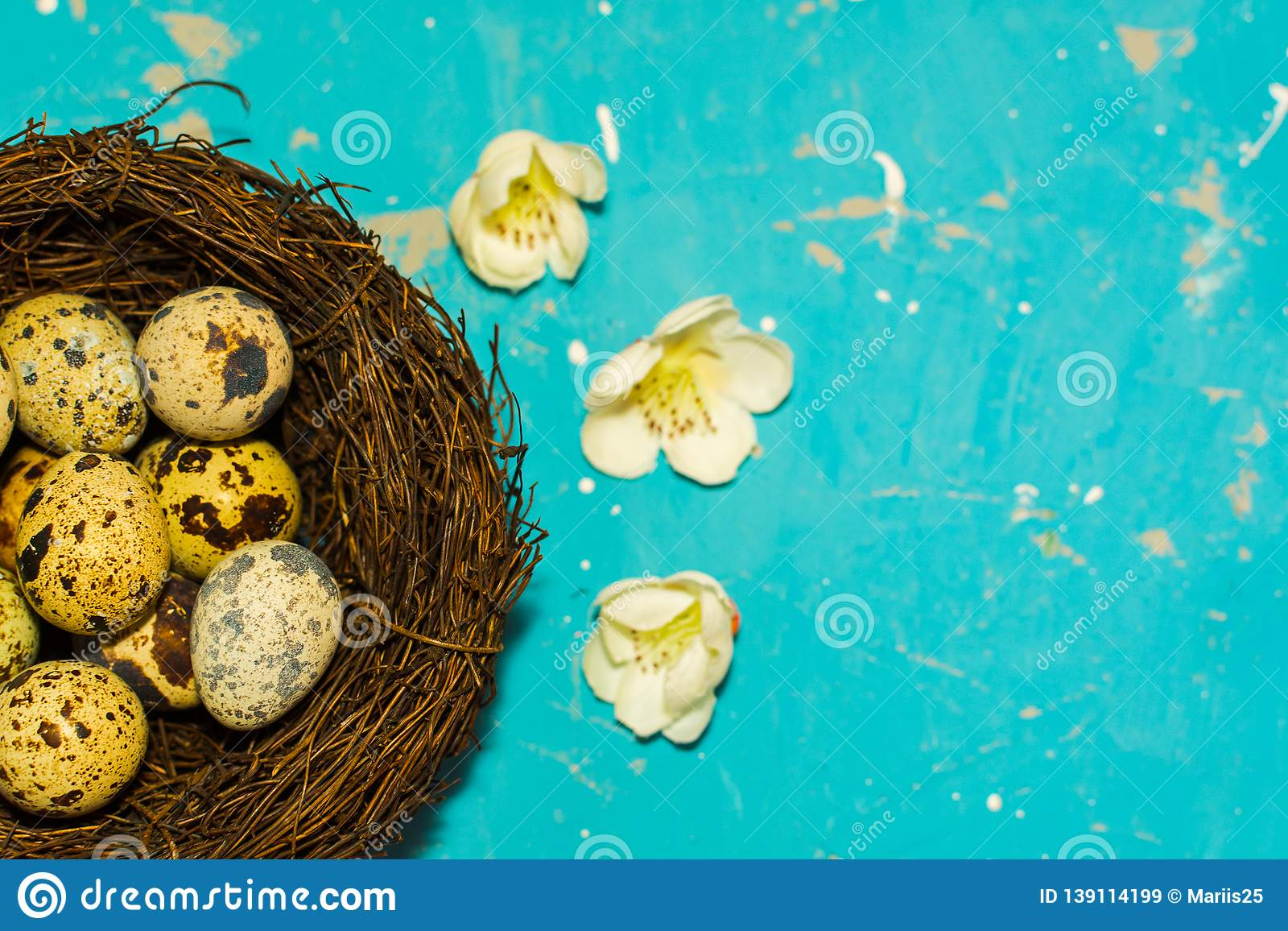 Quail eggs in the nest on blue background. happy Easter