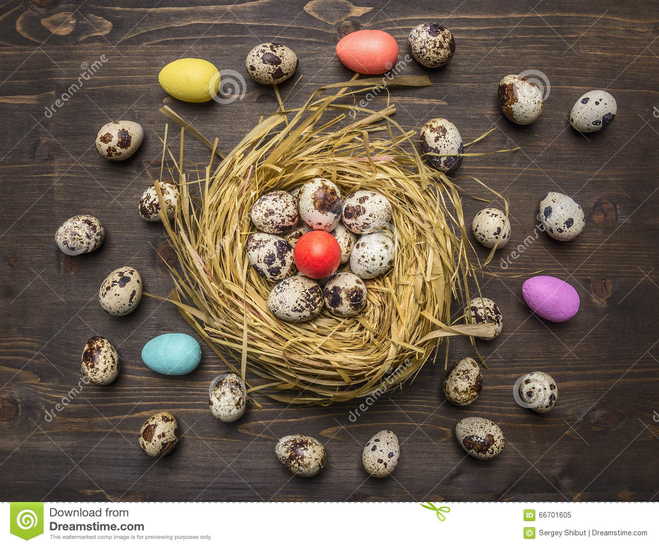 Quail eggs in a nest with colorful decorative eggs for Easter laid out around wooden rustic background top view close up