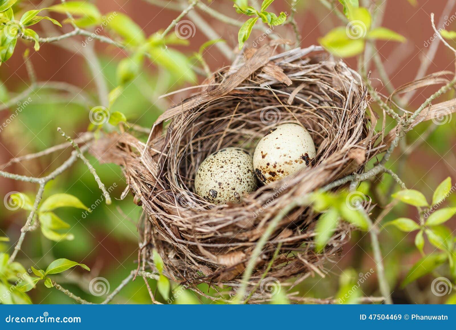 how to open quail eggs