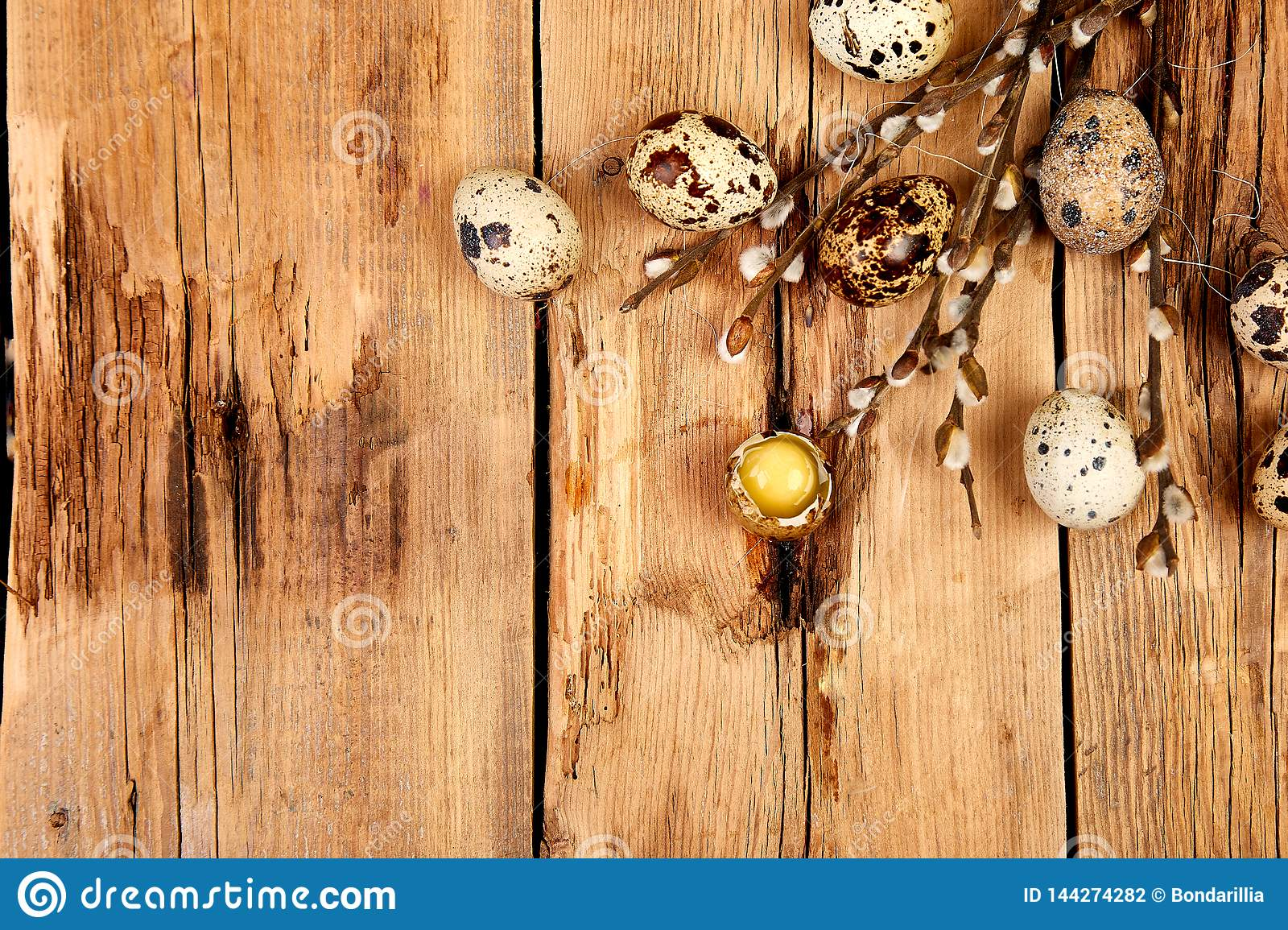 Quail eggs in the nest on wooden background with willow branch