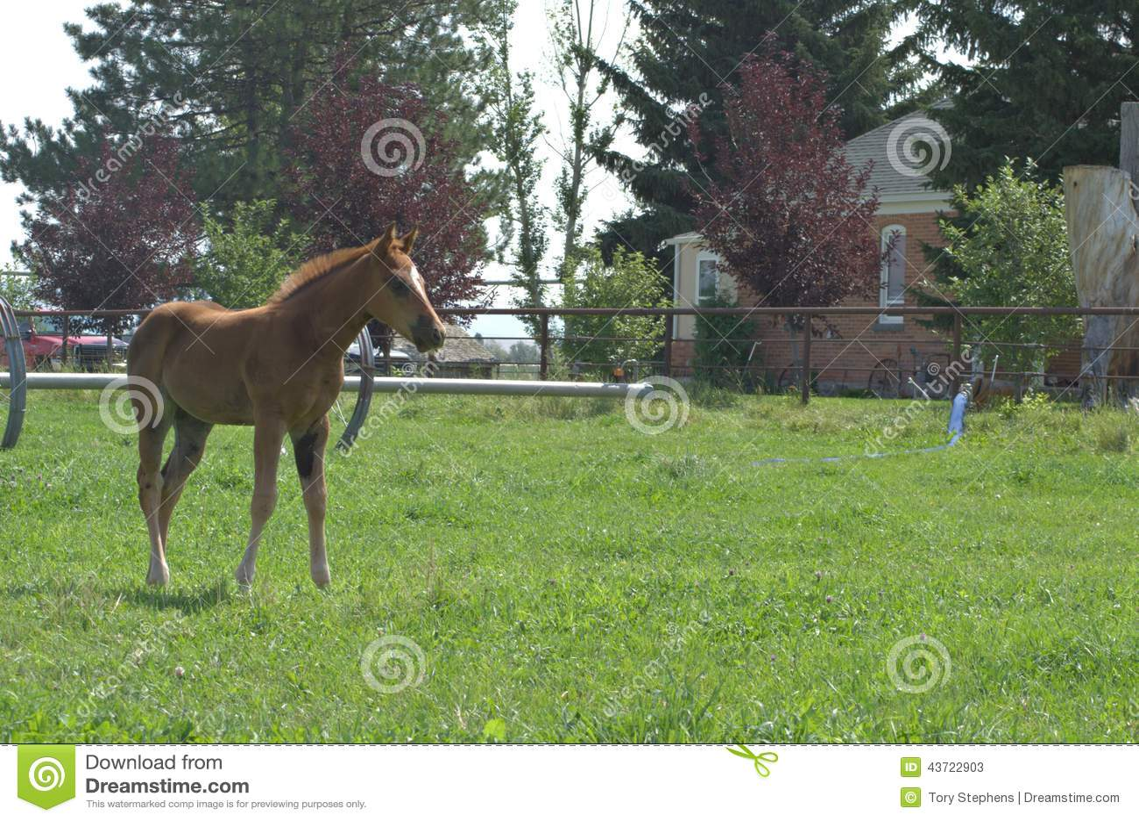 A Quarter Horse Filly