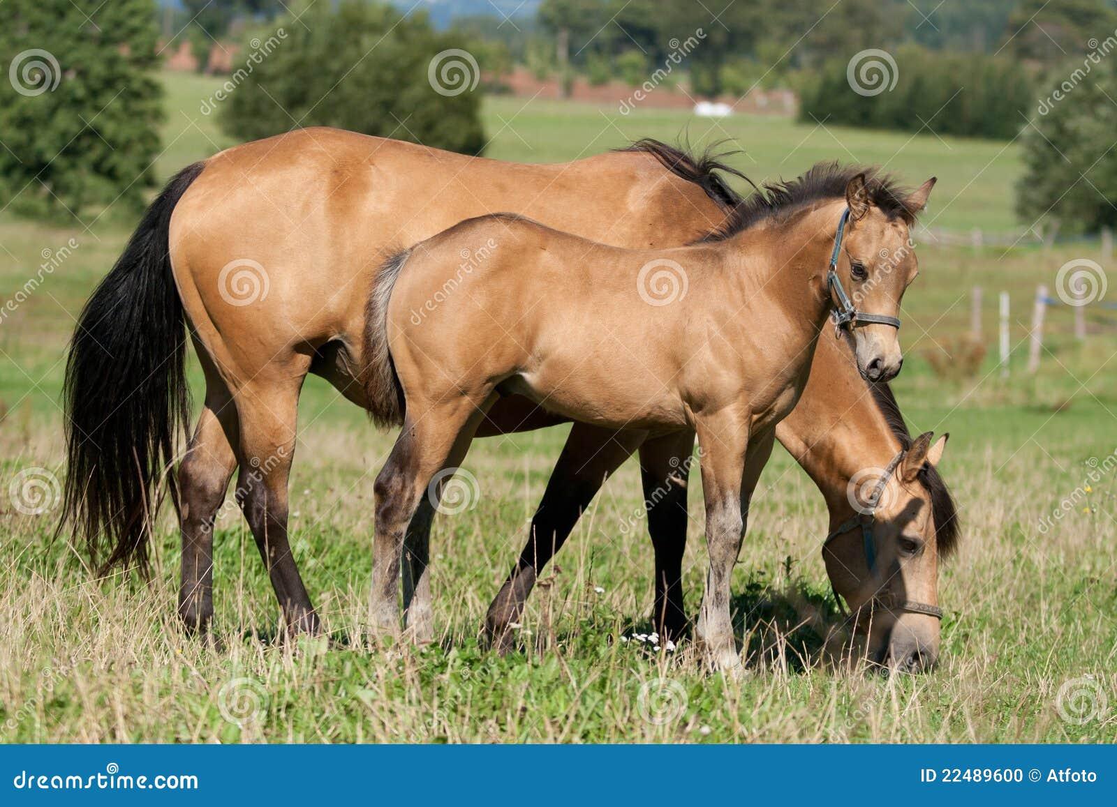 Quarter horse mare for sale in iowa