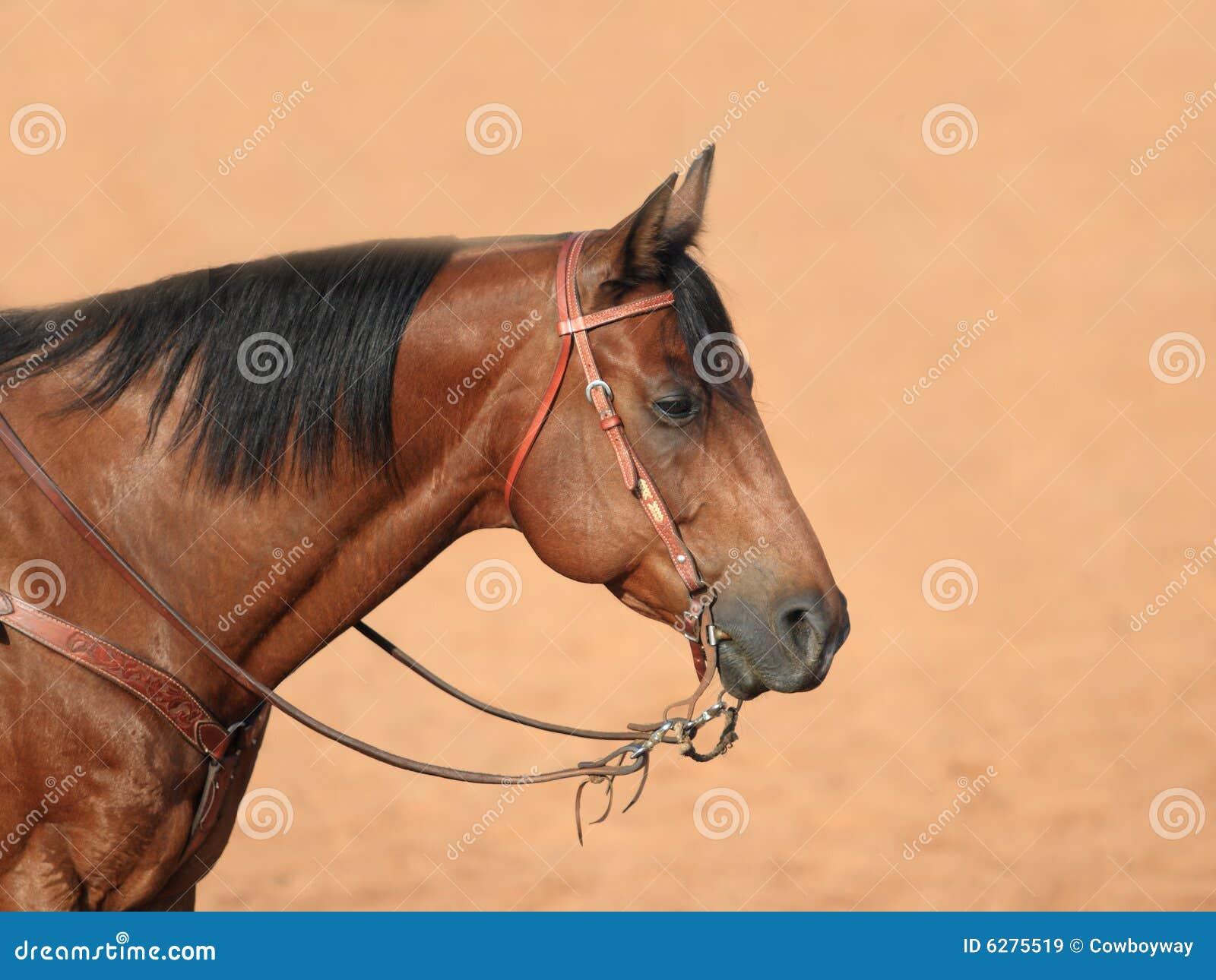 Quarter Horse C...