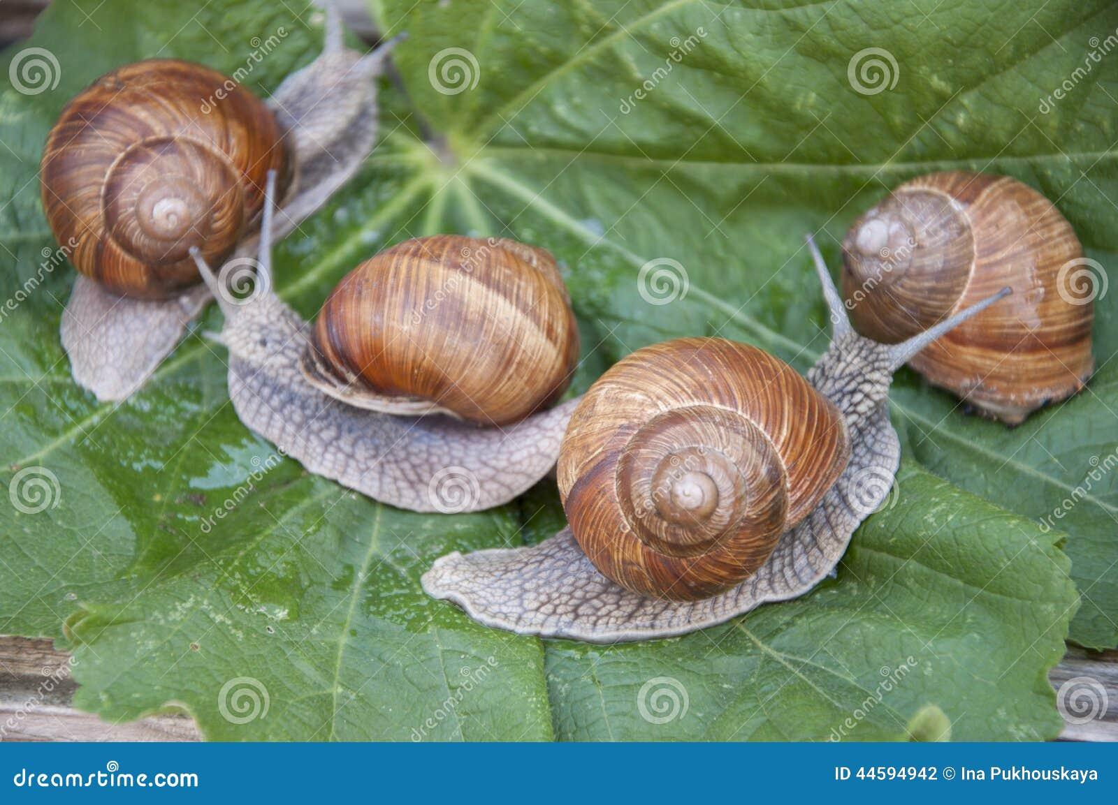 """Résultat de recherche d'images pour """"photo de 4 escargots"""""""
