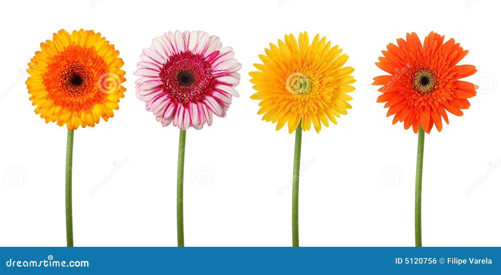 Quatre fleurs d isolement - chemin de découpage