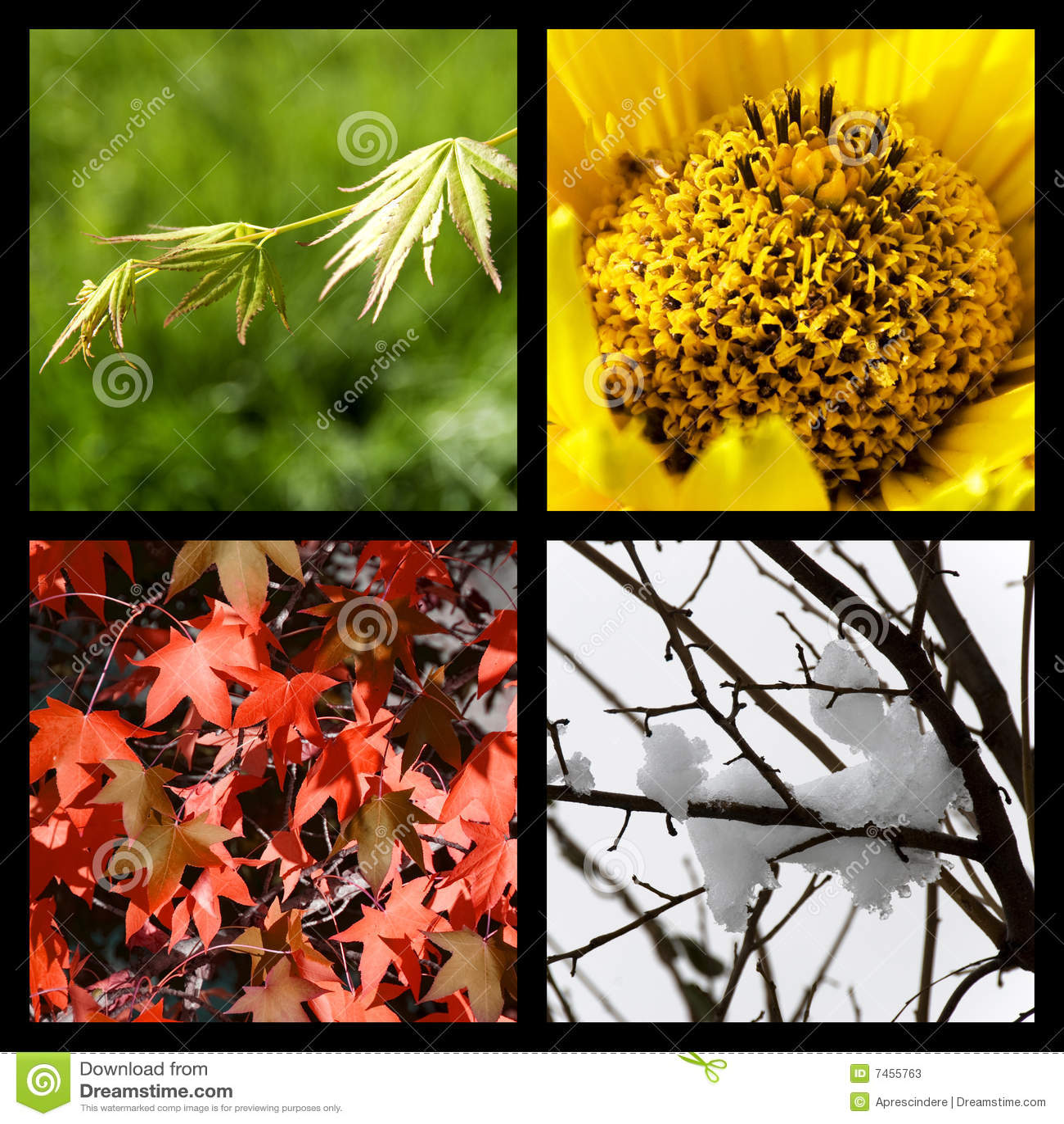 Quatre saisons de nature