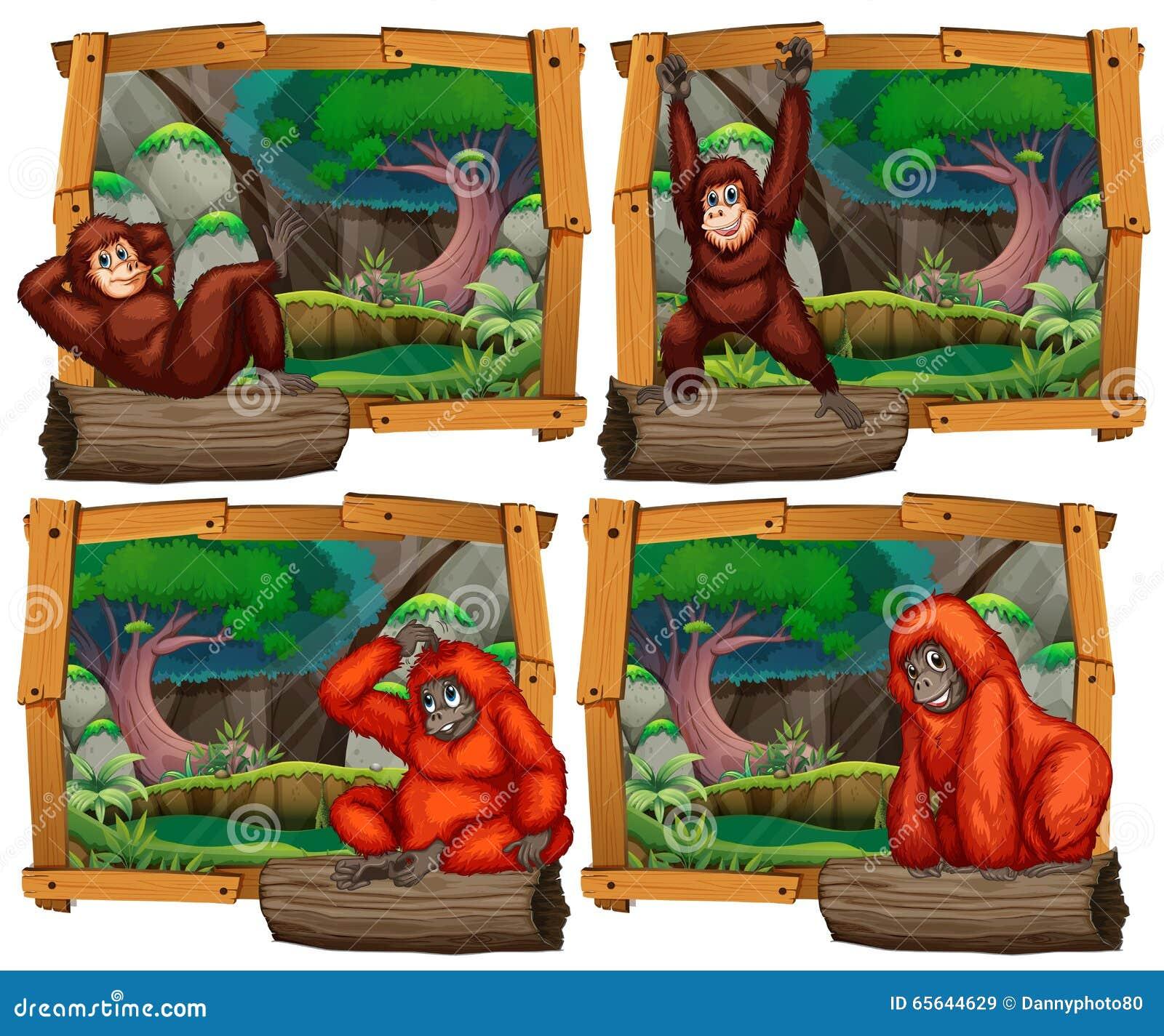 Quatre scènes de singe dans la jungle