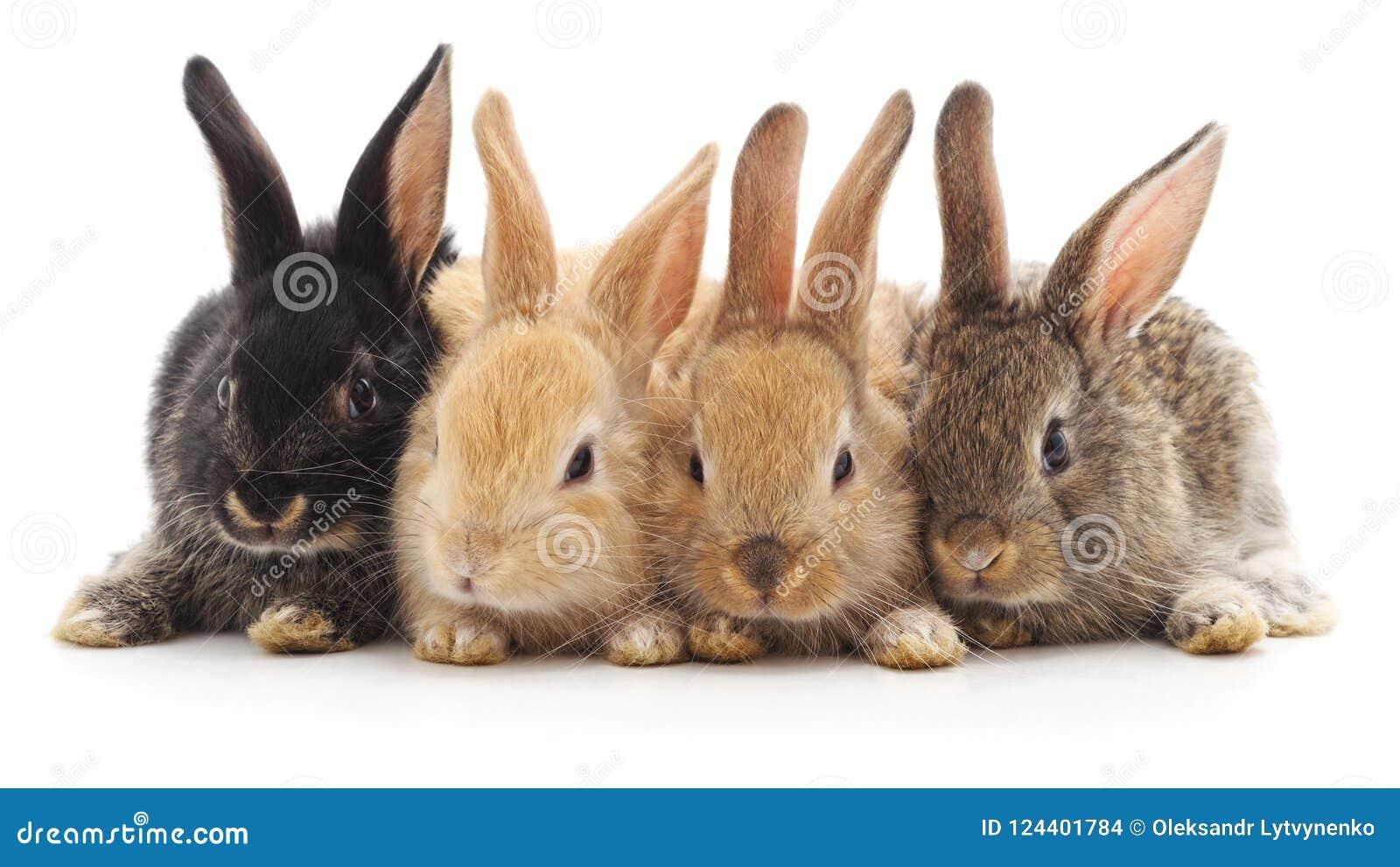 Quatro coelhos pequenos