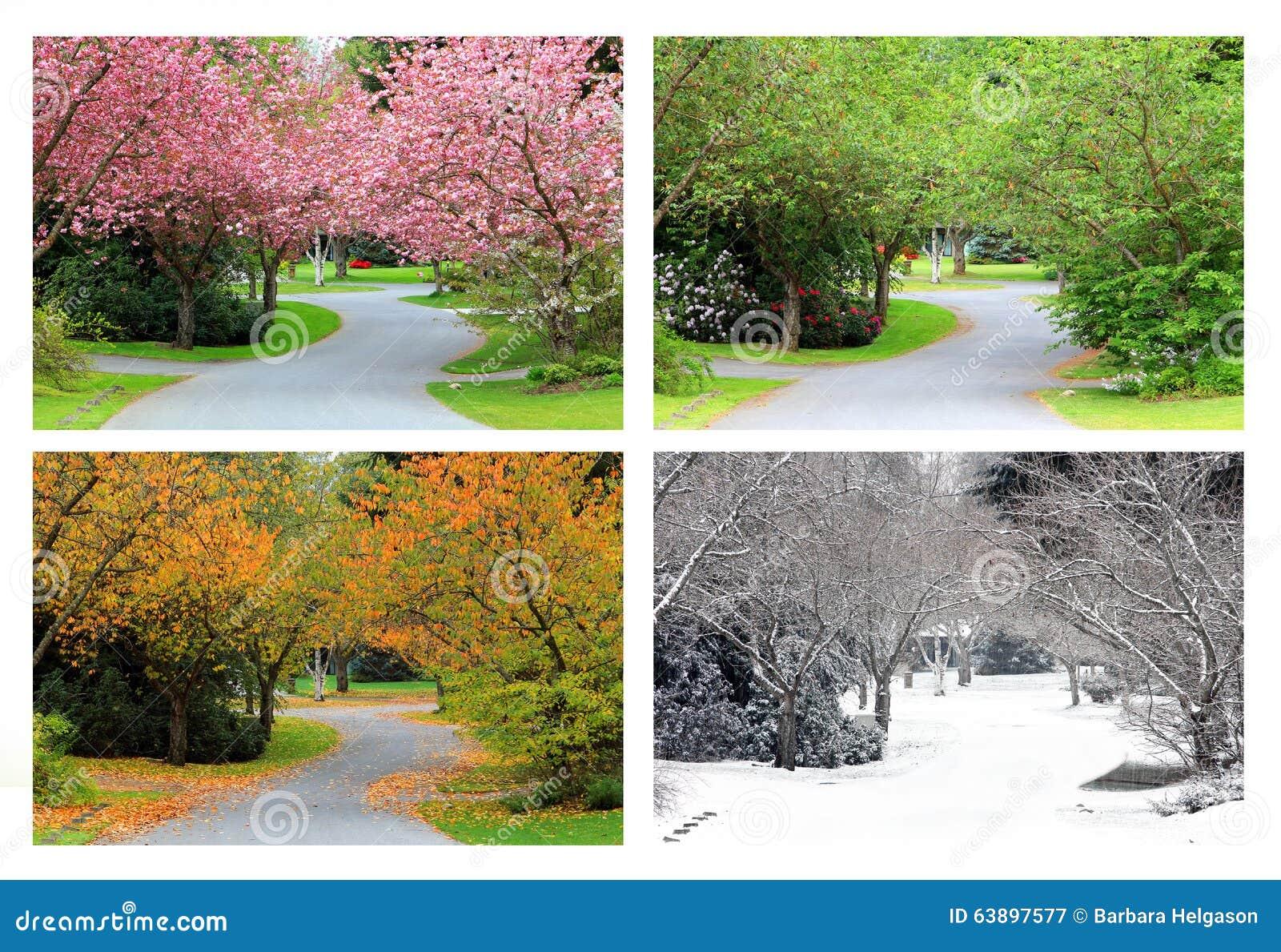 Quatro estações de árvores de cereja na mesma rua