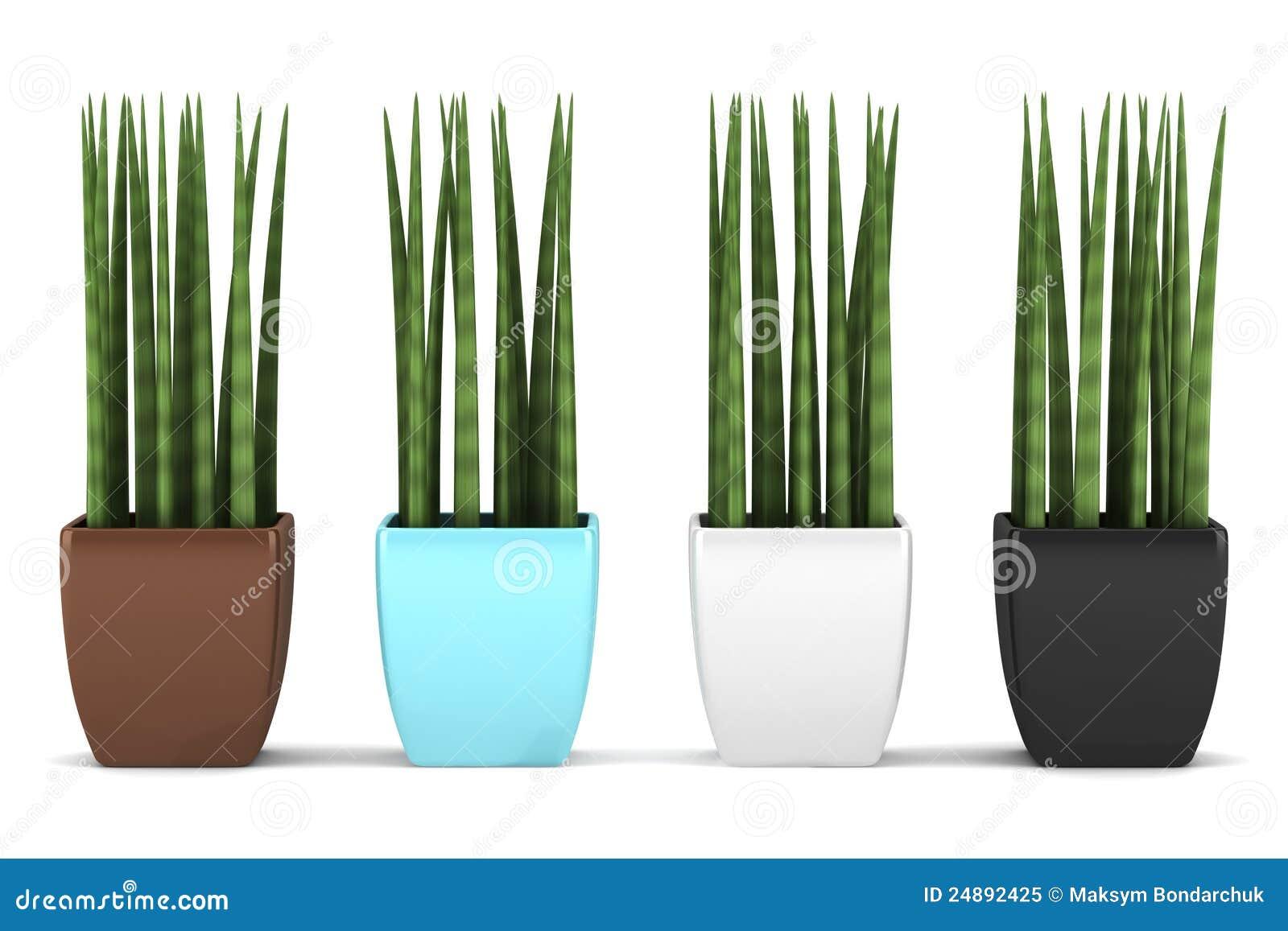 404 not found for Plantas decorativas